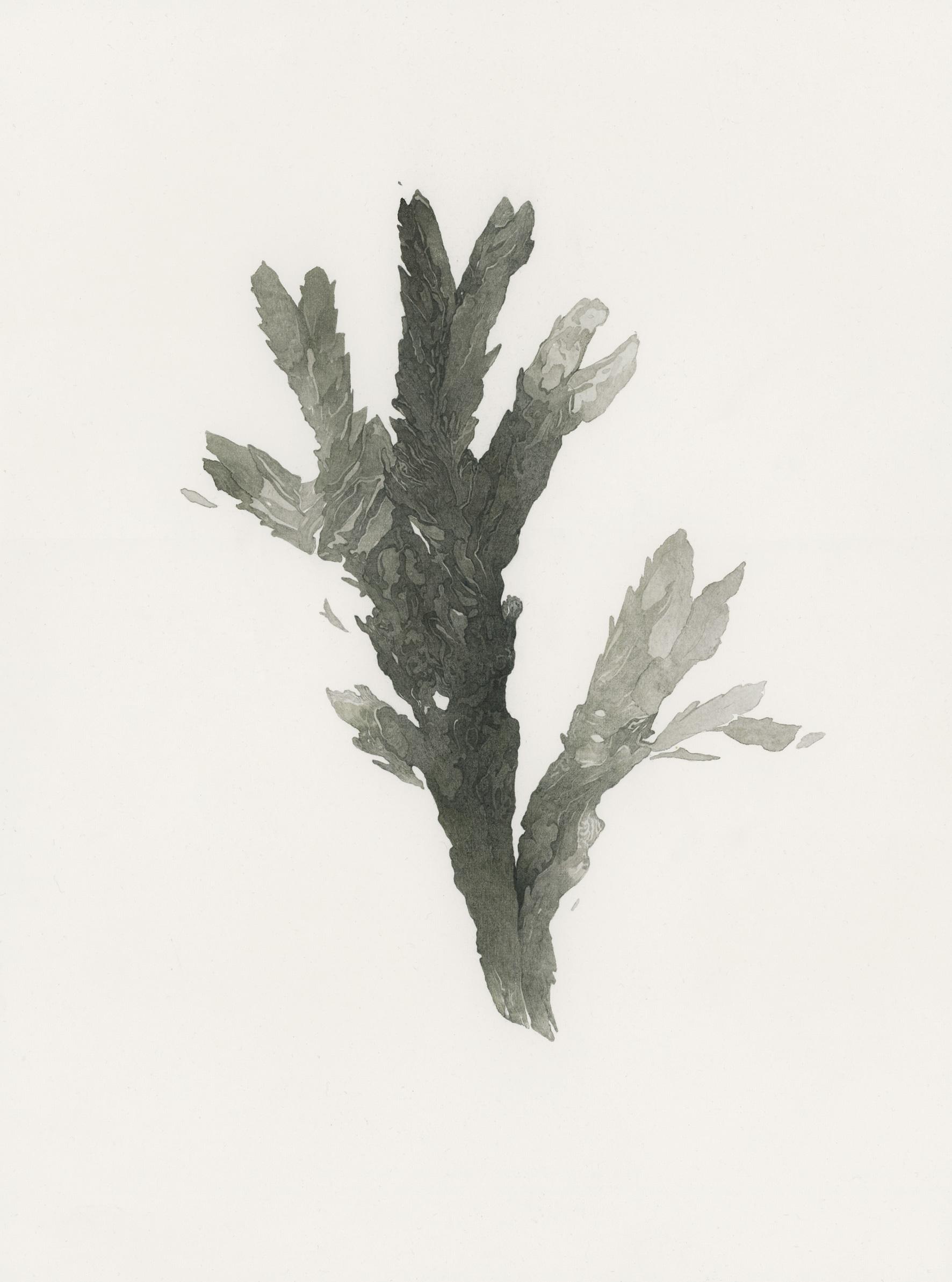 Mélanie Delattre-Vogt,  Parlez-moi de votre panthère , Paris-Frankfurt-Den Haag, aquarelle, encre, sang et crayon gris sur papier, 31 x 23 cm, 2017.