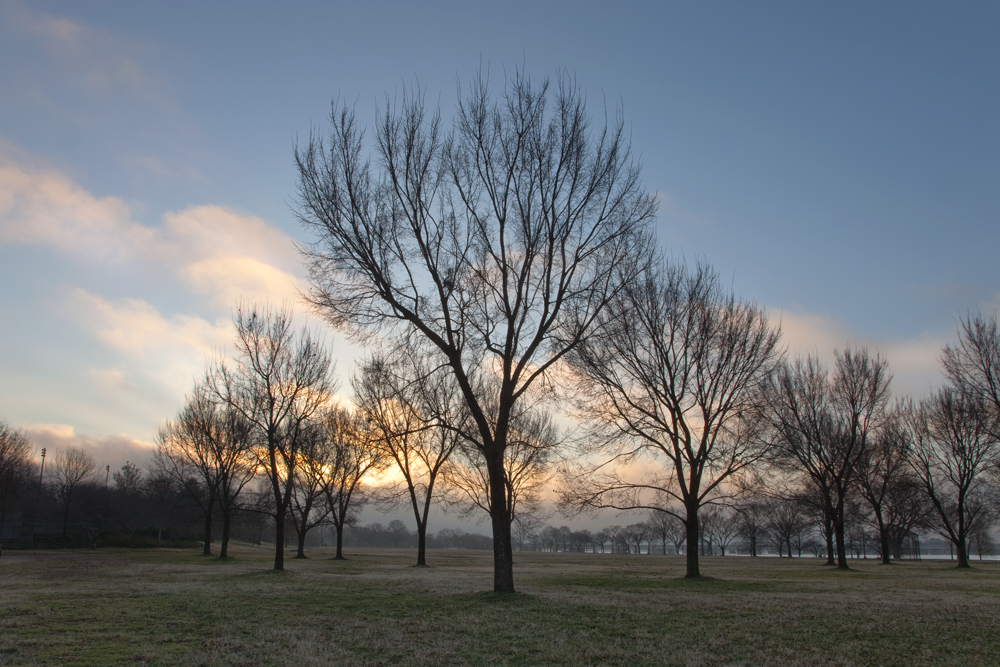 West Potomac Park, January Morning