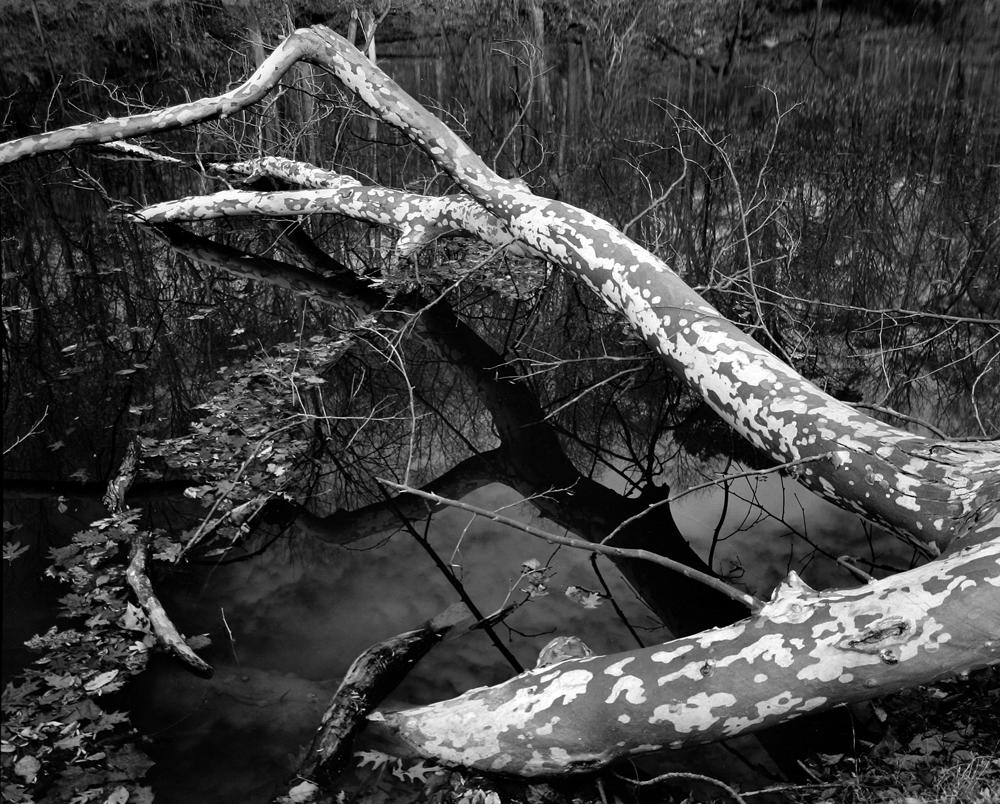 Death in Potomac