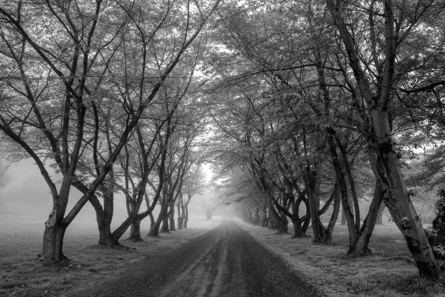 Road Less Traveled, Potomac MD