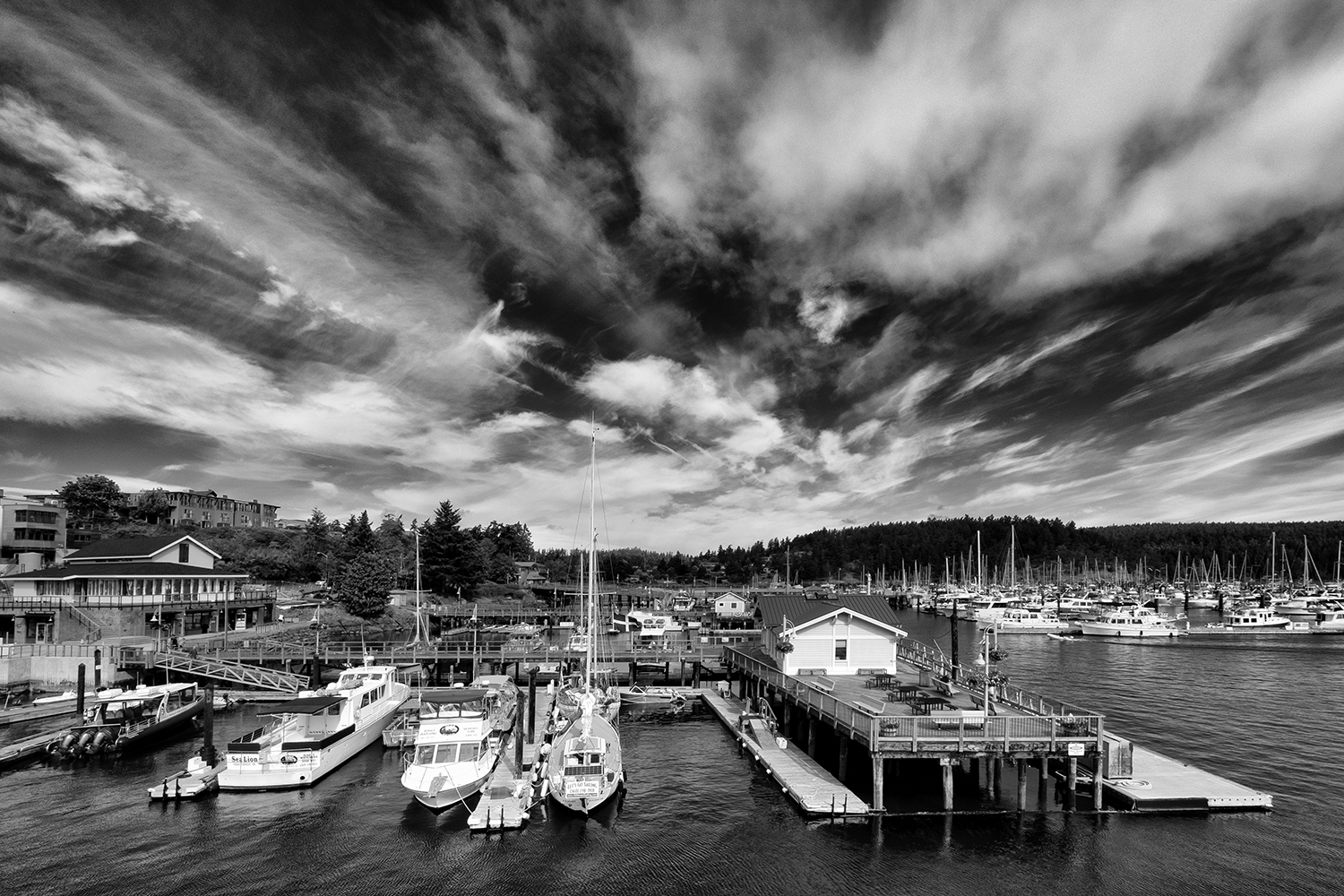 Friday Harbor, WA, July Morning