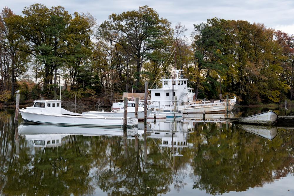Tighman Creek, November Morning, American Landscapes 2013