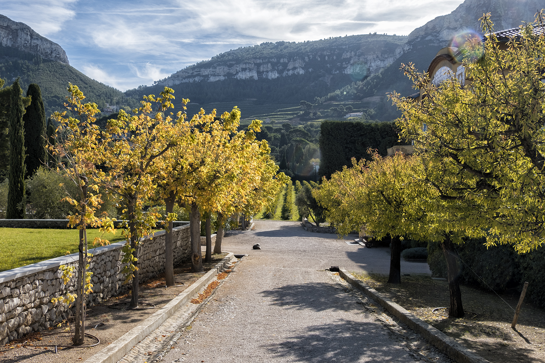 Clos Sainte-Magdeleine, Cassis, France, October Morning
