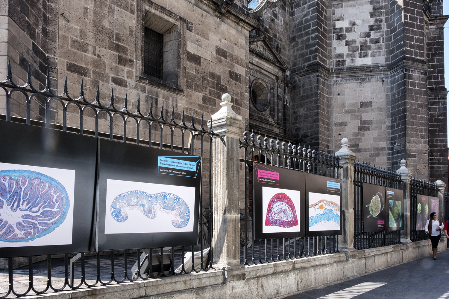 Scientific Photographs at the Metropolitan Cathedral, Mexico City
