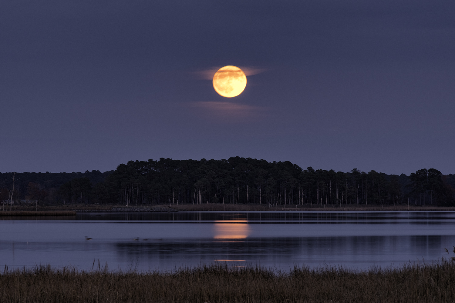 Blackwater NWR, November Moonrise