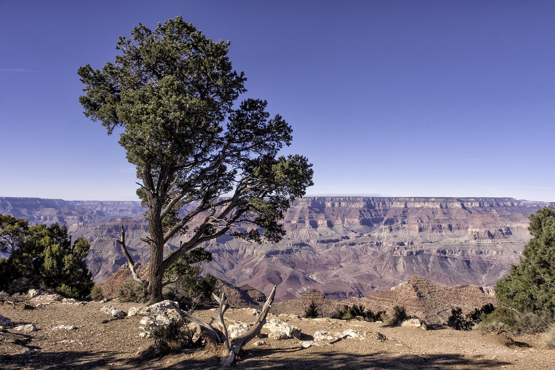171128 Grand Canyon 44-1.jpg
