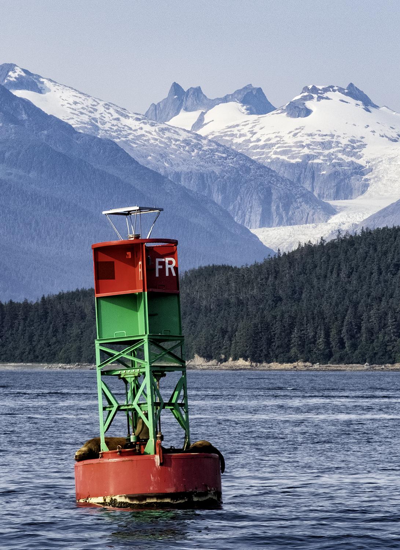 Seals and Mountains, Juneau Alaska