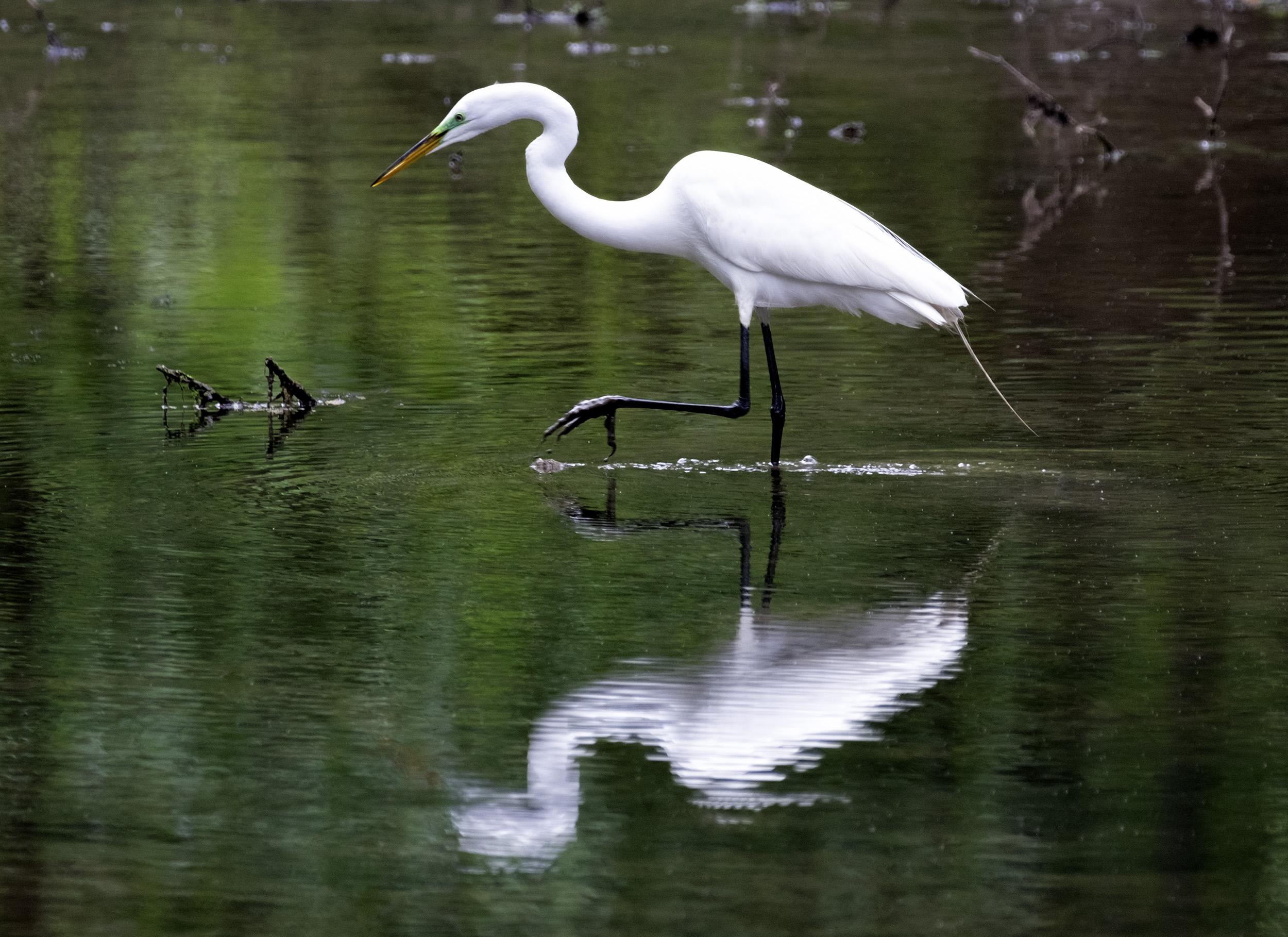 190509 XT2 Canal Birds  093-1 flt.jpg