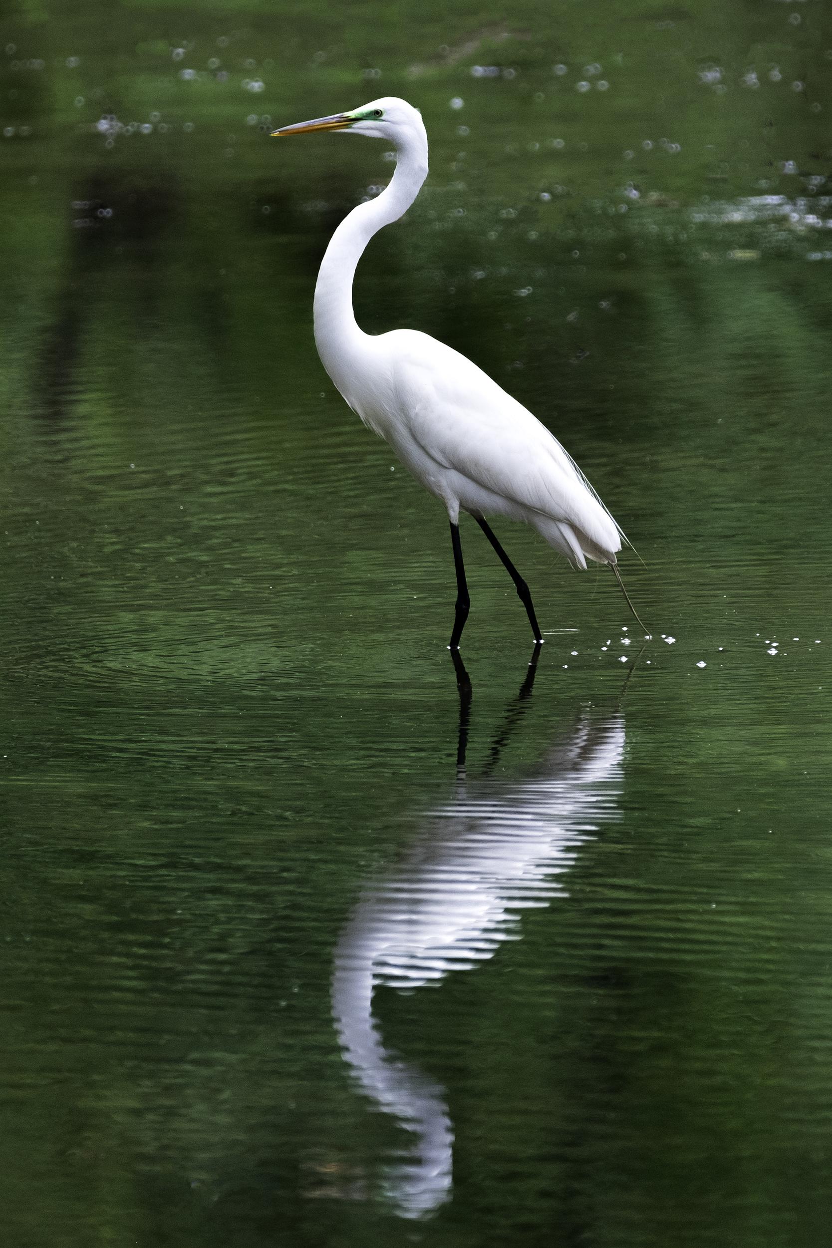 190509 XT2 Canal Birds  101-1 flt.jpg