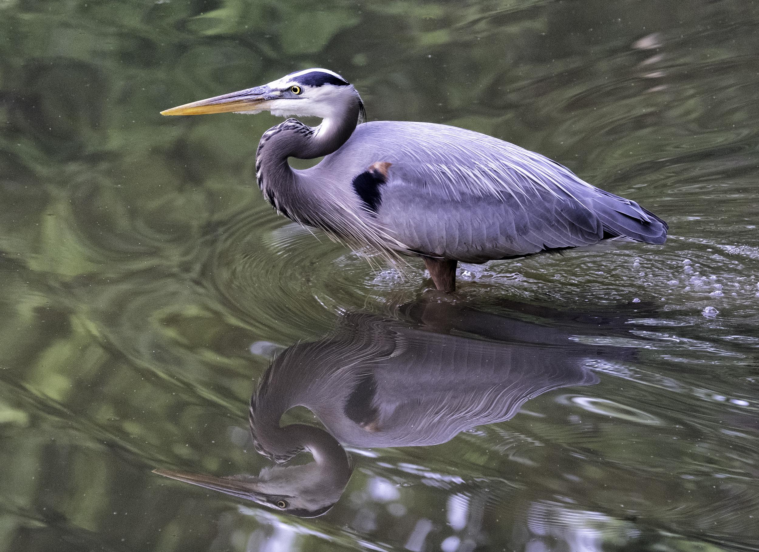 190508 XT2 Canal Birds  016-1.jpg