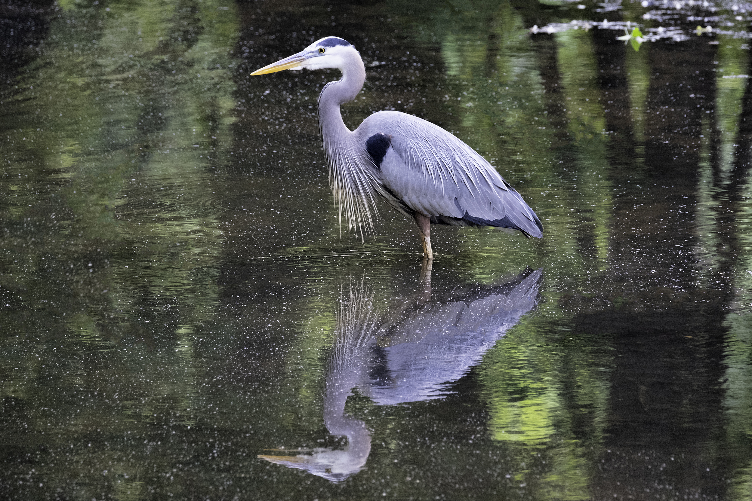 190508 XT2 Canal Birds  009-1 flt.jpg