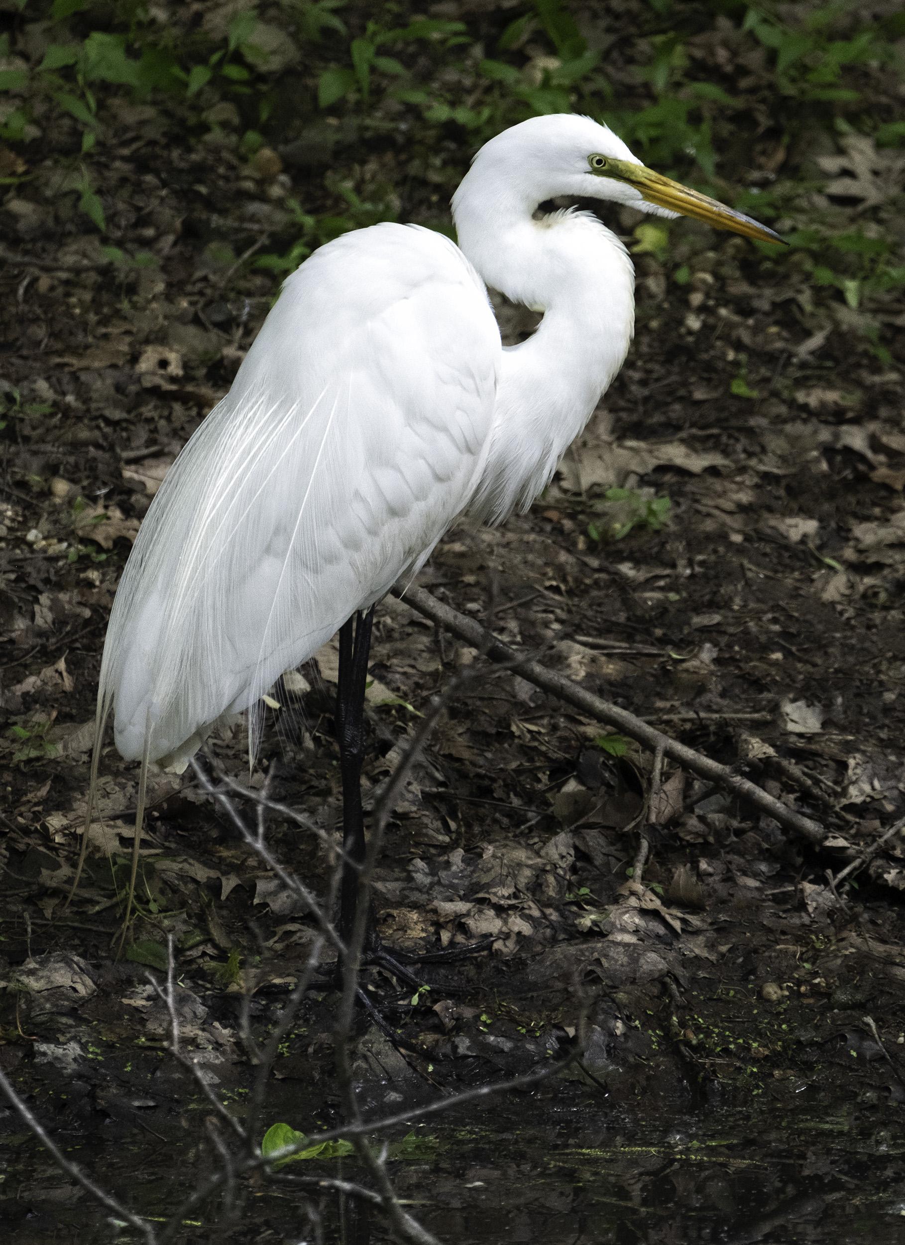 190514 XT2 Canal Birds  244-1 cln.jpg
