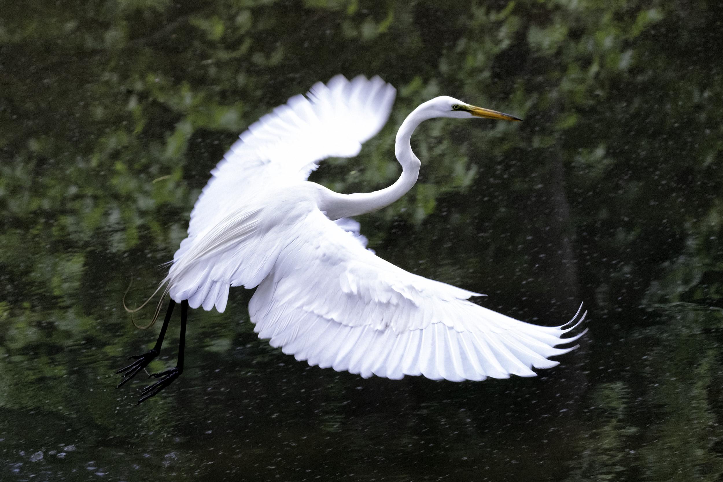 190514 XT2 Canal Birds  117-1 cln.jpg