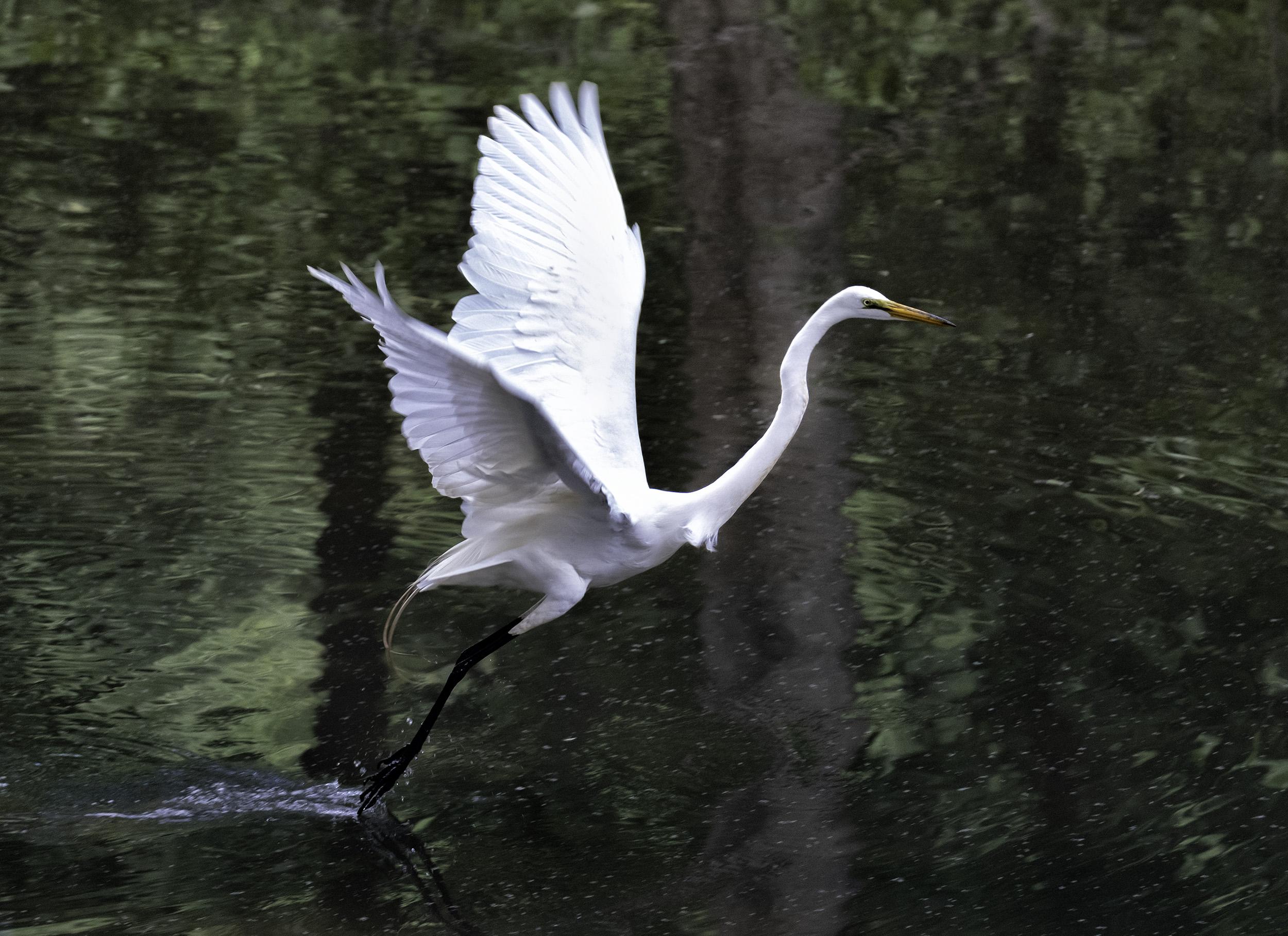 190514 XT2 Canal Birds  109-1.jpg