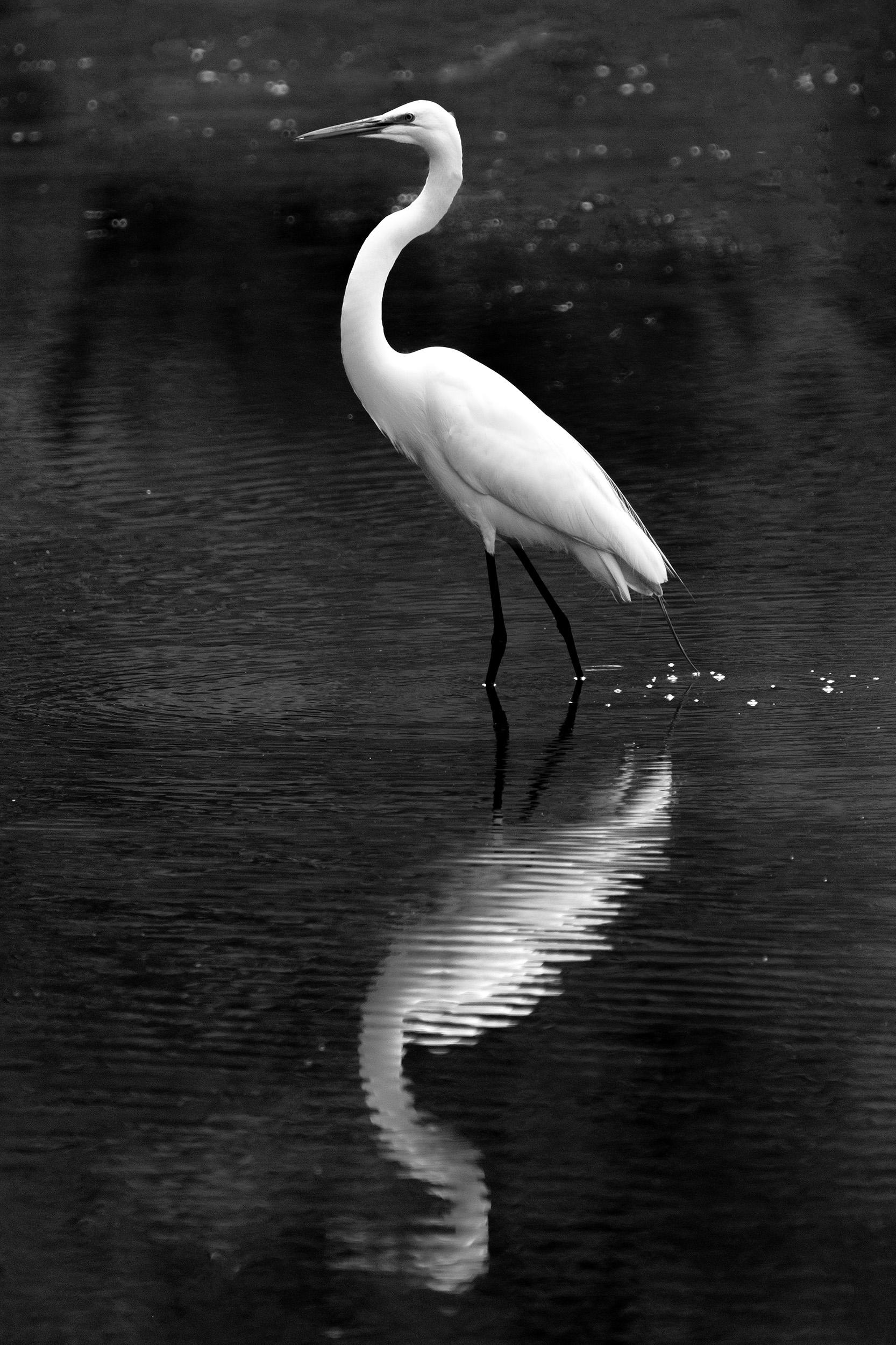 190509 XT2 Canal Birds  101-1 flt bw.jpg