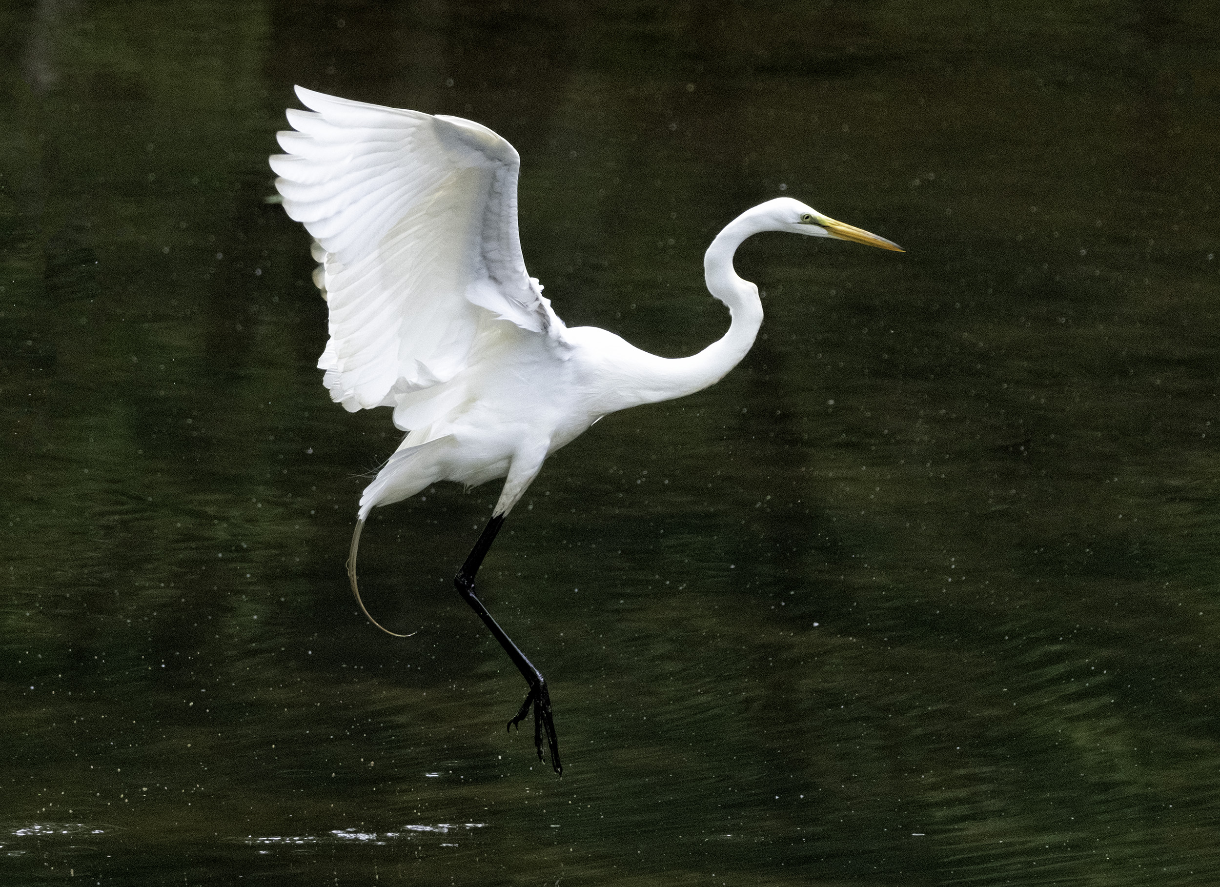 190518 Canal Birds XT2 117-1 flt.jpg