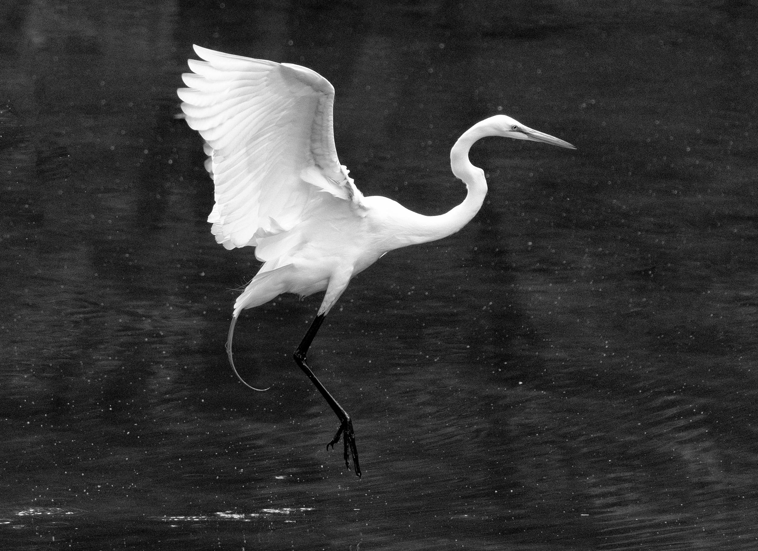 190518 Canal Birds XT2 117-1 flt bw.jpg