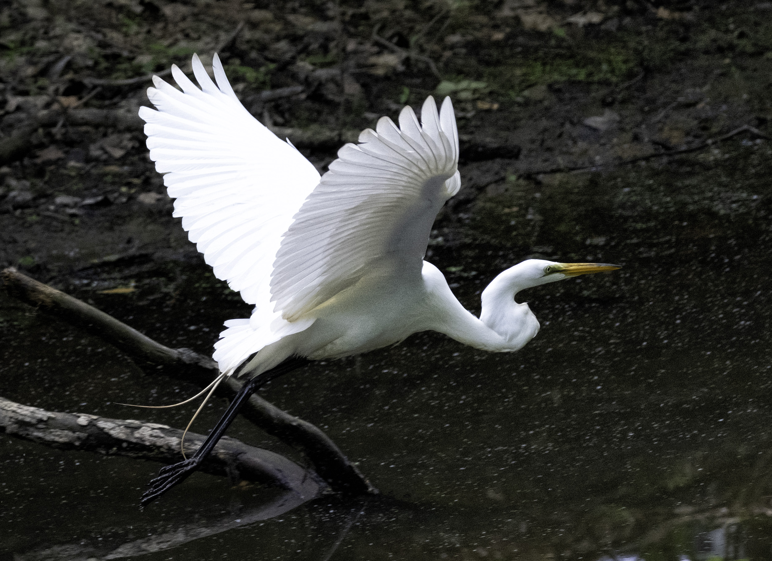 190518 Canal Birds XT2 210-1 cln.jpg