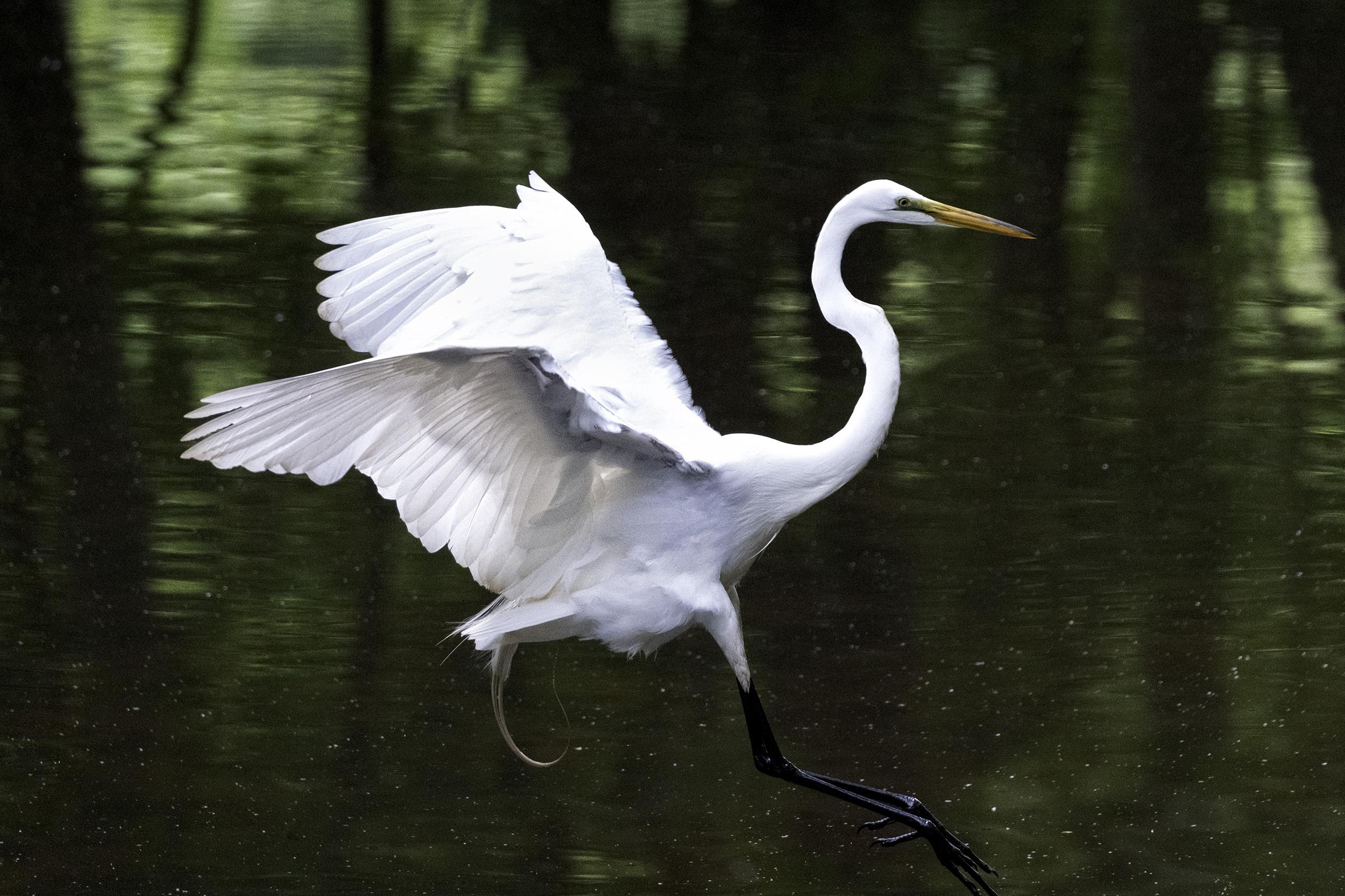 190518 Canal Birds XT2 223-1.jpg
