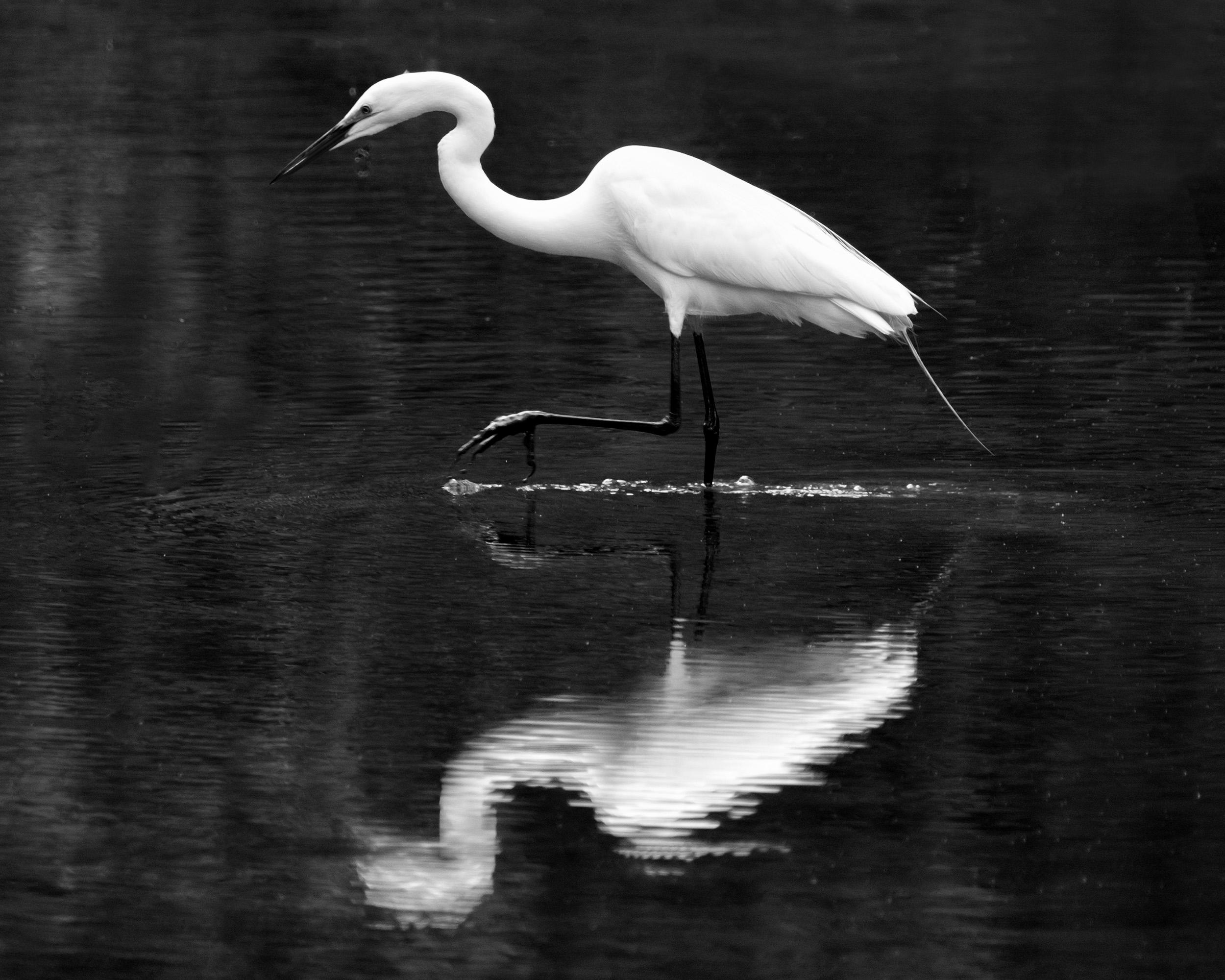 190509 XT2 Canal Birds  093-1 bw.jpg