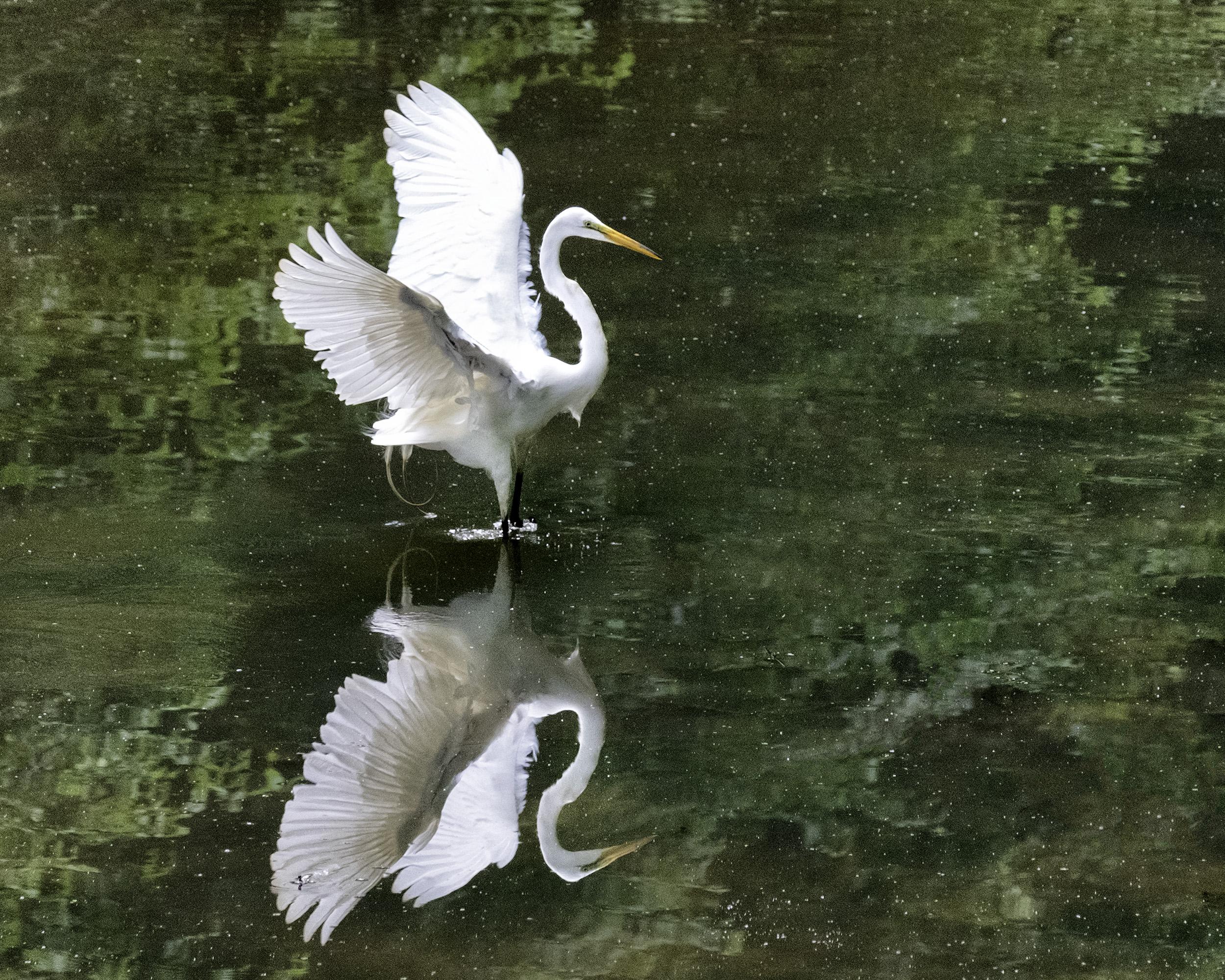 190518 Canal Birds XT2 161-1 cln.jpg