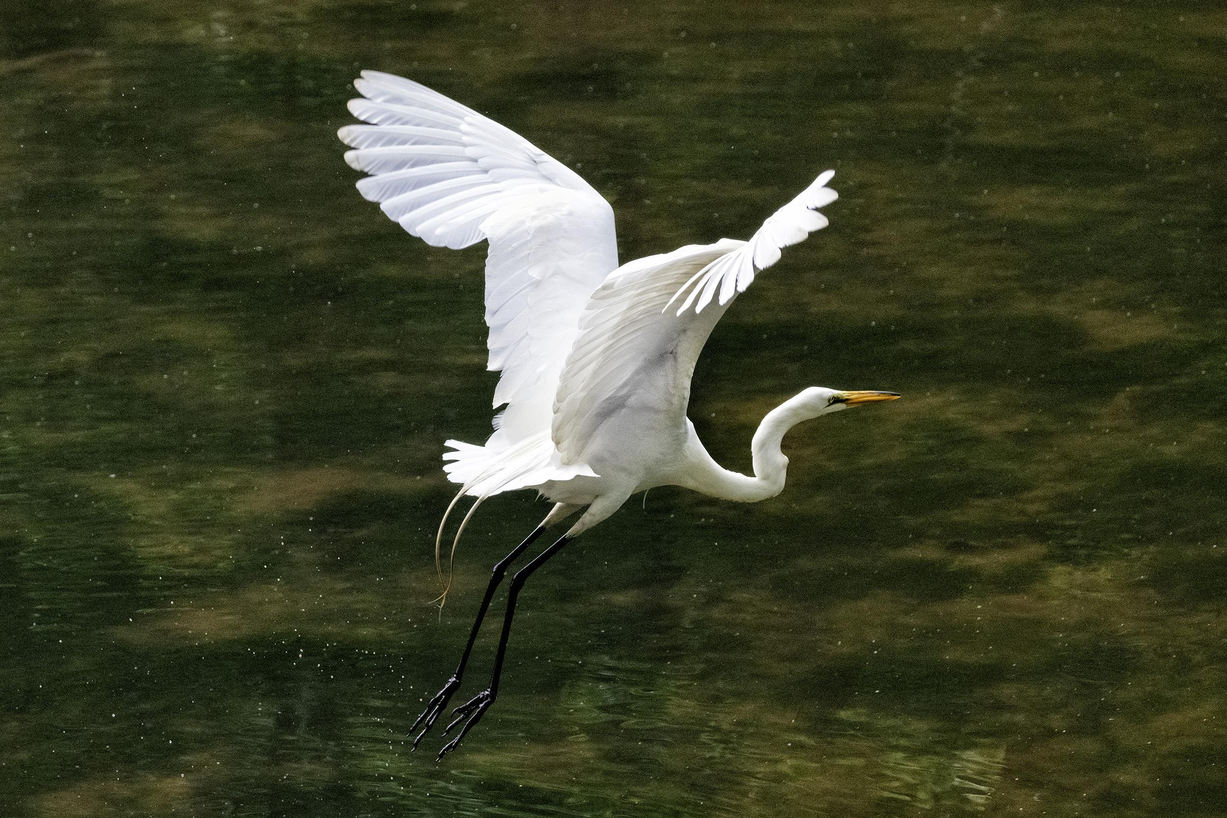 190518 Canal Birds XT2 122-1.jpg