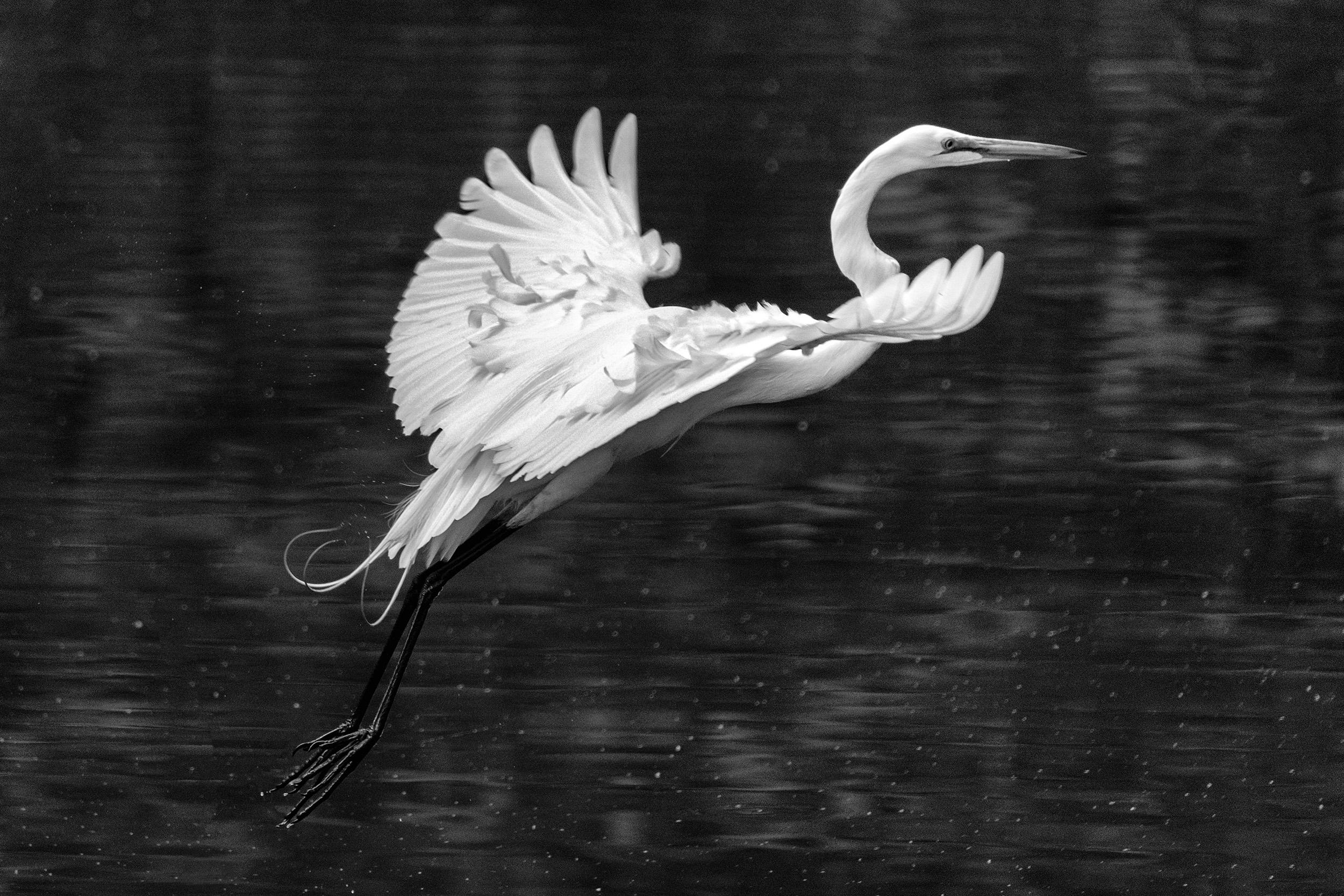 190518 Canal Birds XT2 127-1 cln bw.jpg