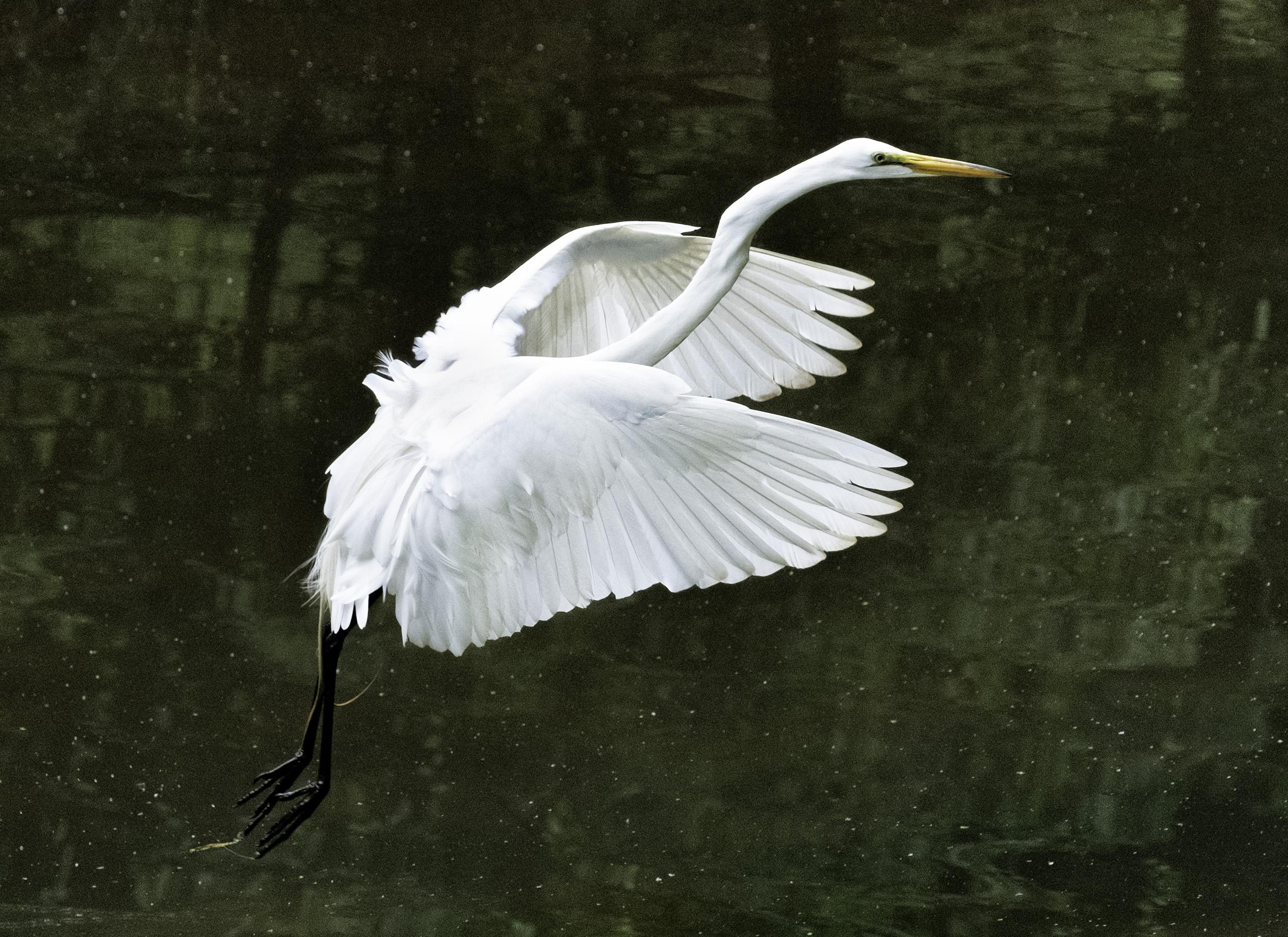 190518 Canal Birds XT2 184-1.jpg
