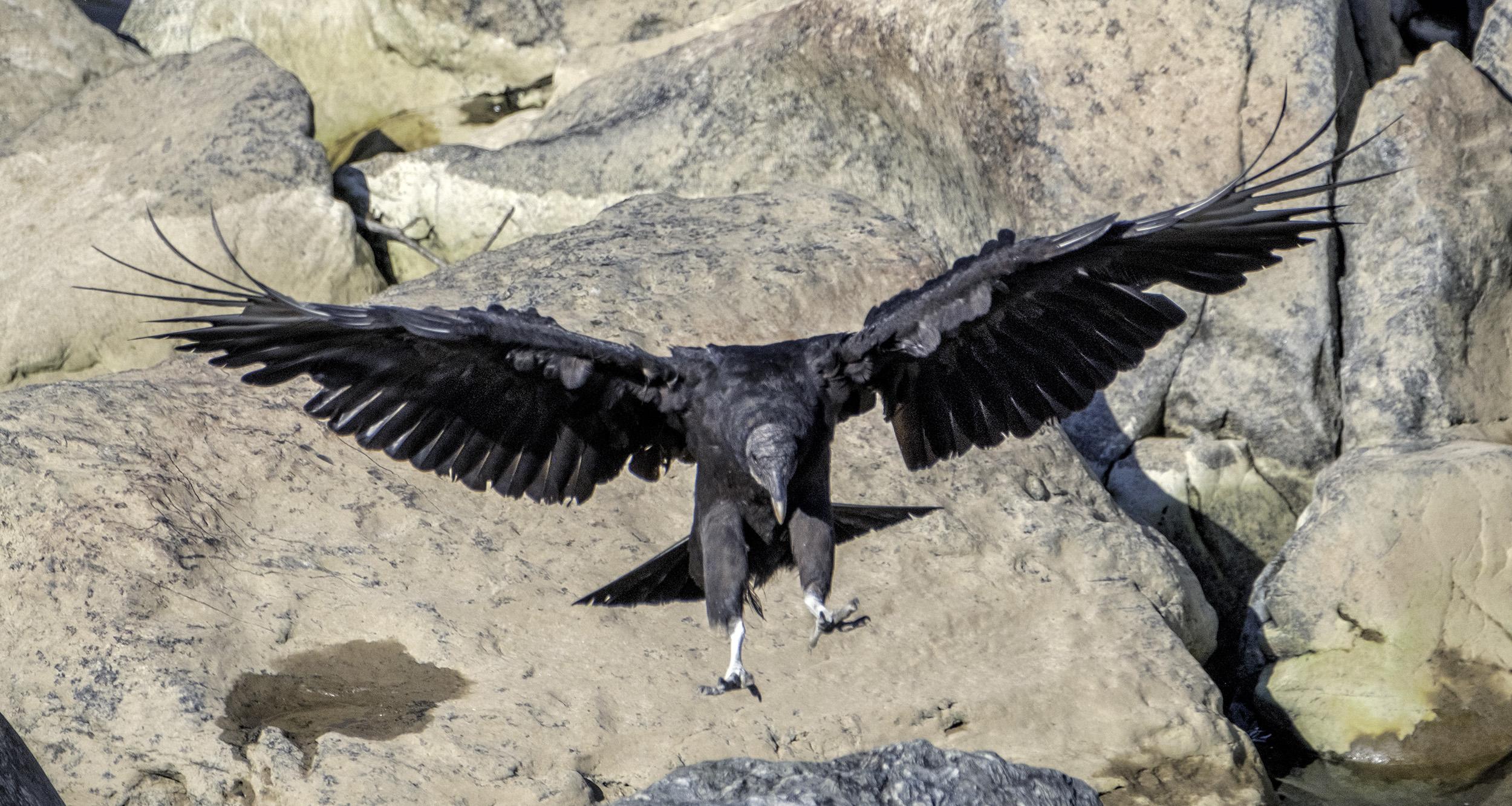 190526 Herons 021-1.jpg