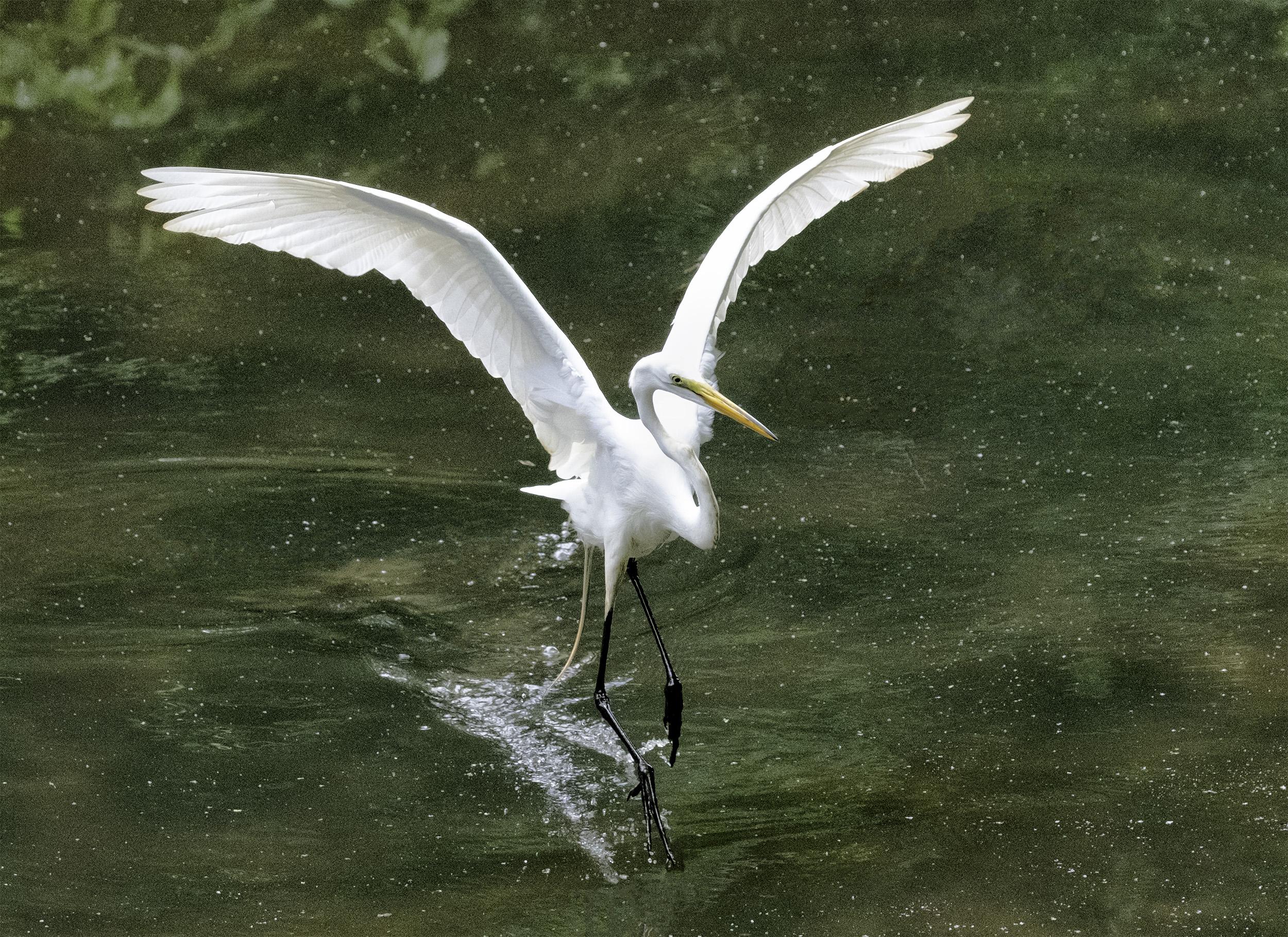 190518 Canal Birds XT2 162-1.jpg