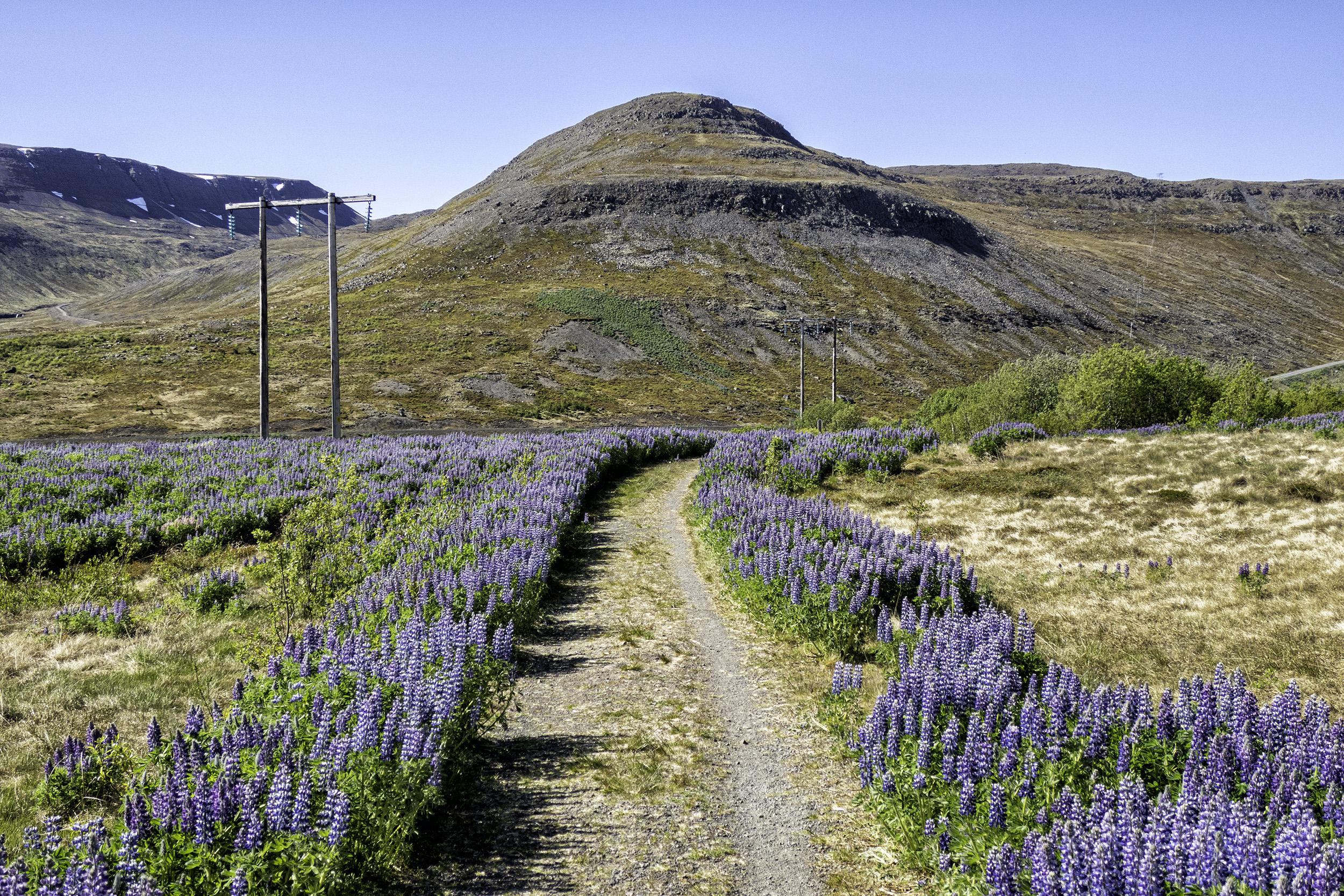 Ísafjarðarbær, Iceland