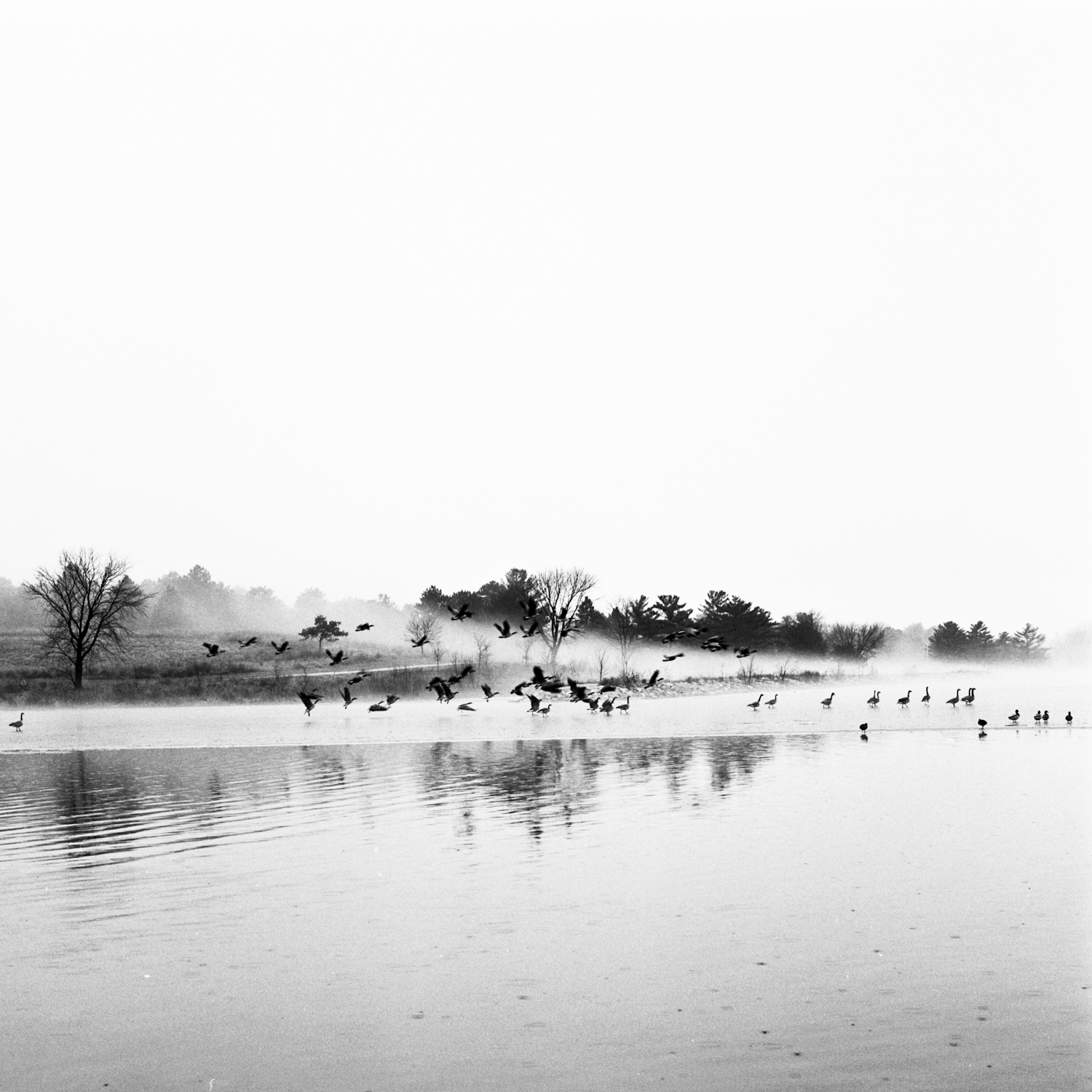 Copy of Geese, Fog, Lifting, Fine Art Black and White Photography, Nebraska Black and White Photography, Great Plains Landscape Photography, Nebraska Photography.