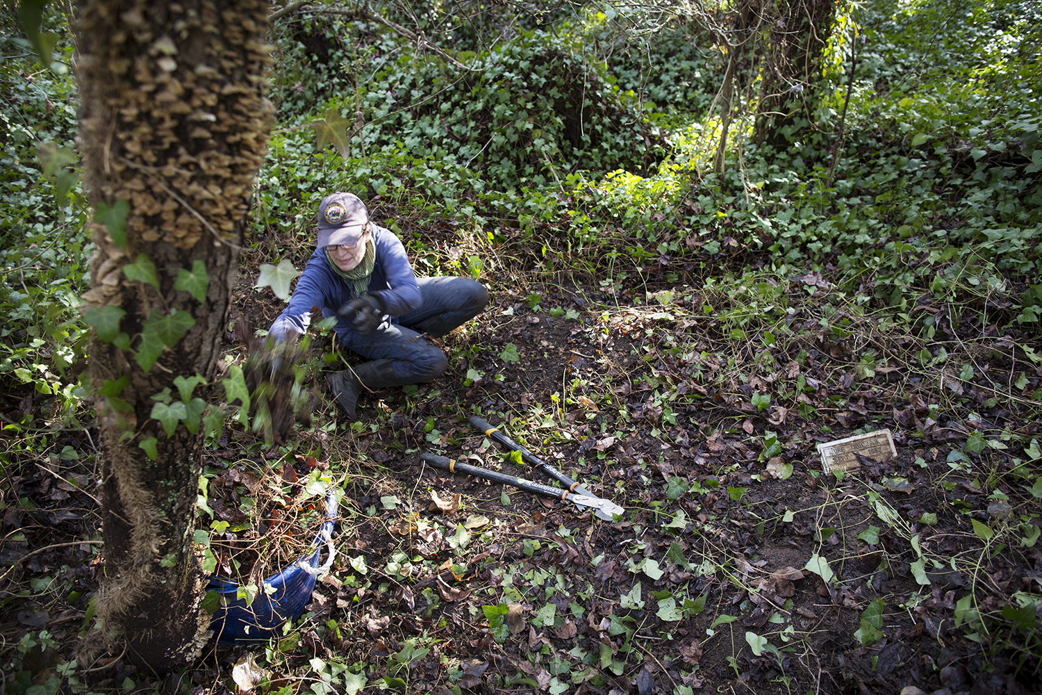 Erin clears invasive plants and vinesfrom graves,East End Cemetery work day, January 2015.©brianpalmer.photos 2015