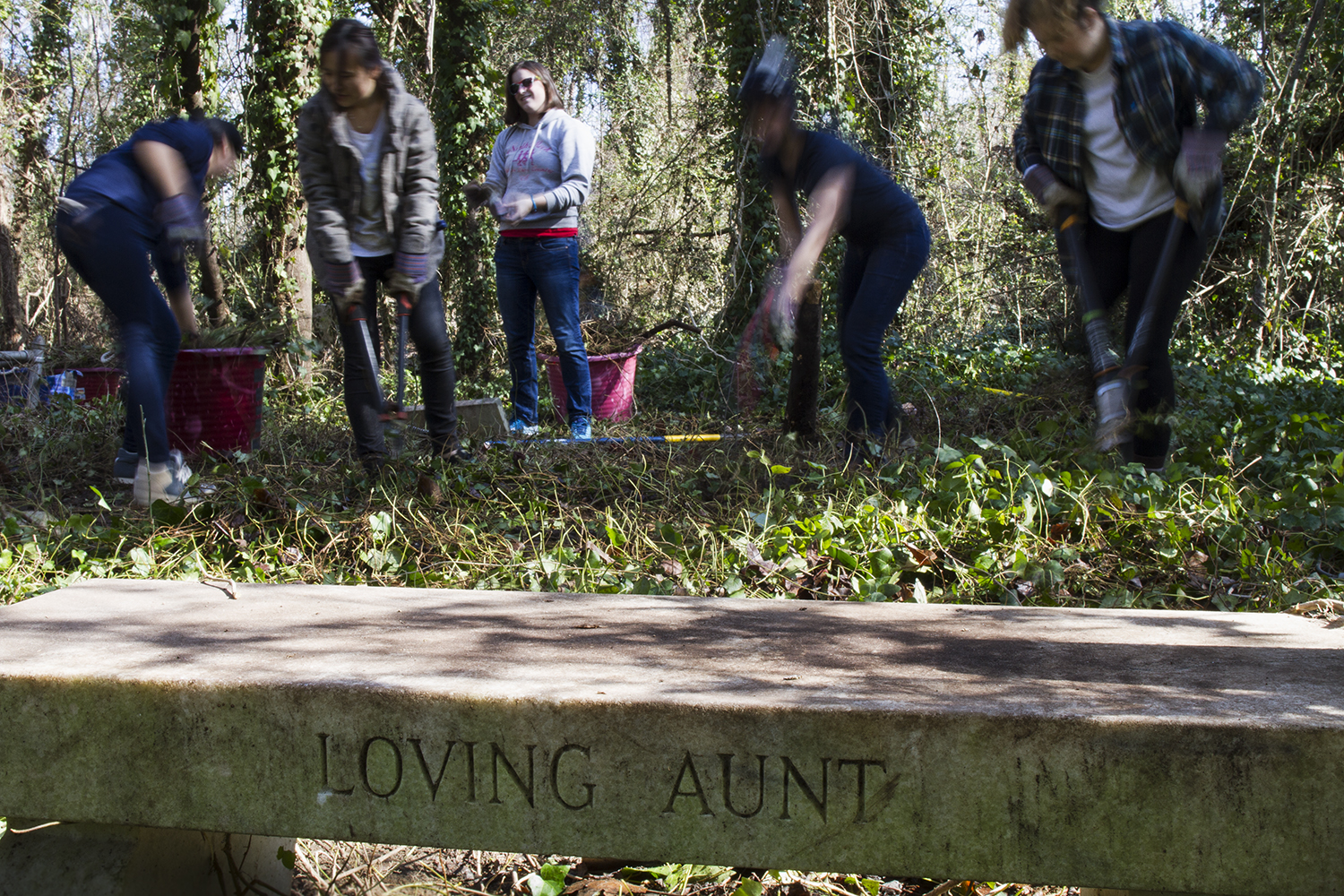 University of Richmond students, members of Alpha Phi Omega, clear undergrowth from graves during an East End Cemetery work day, January 2015. ©brianpalmer.photos 2015