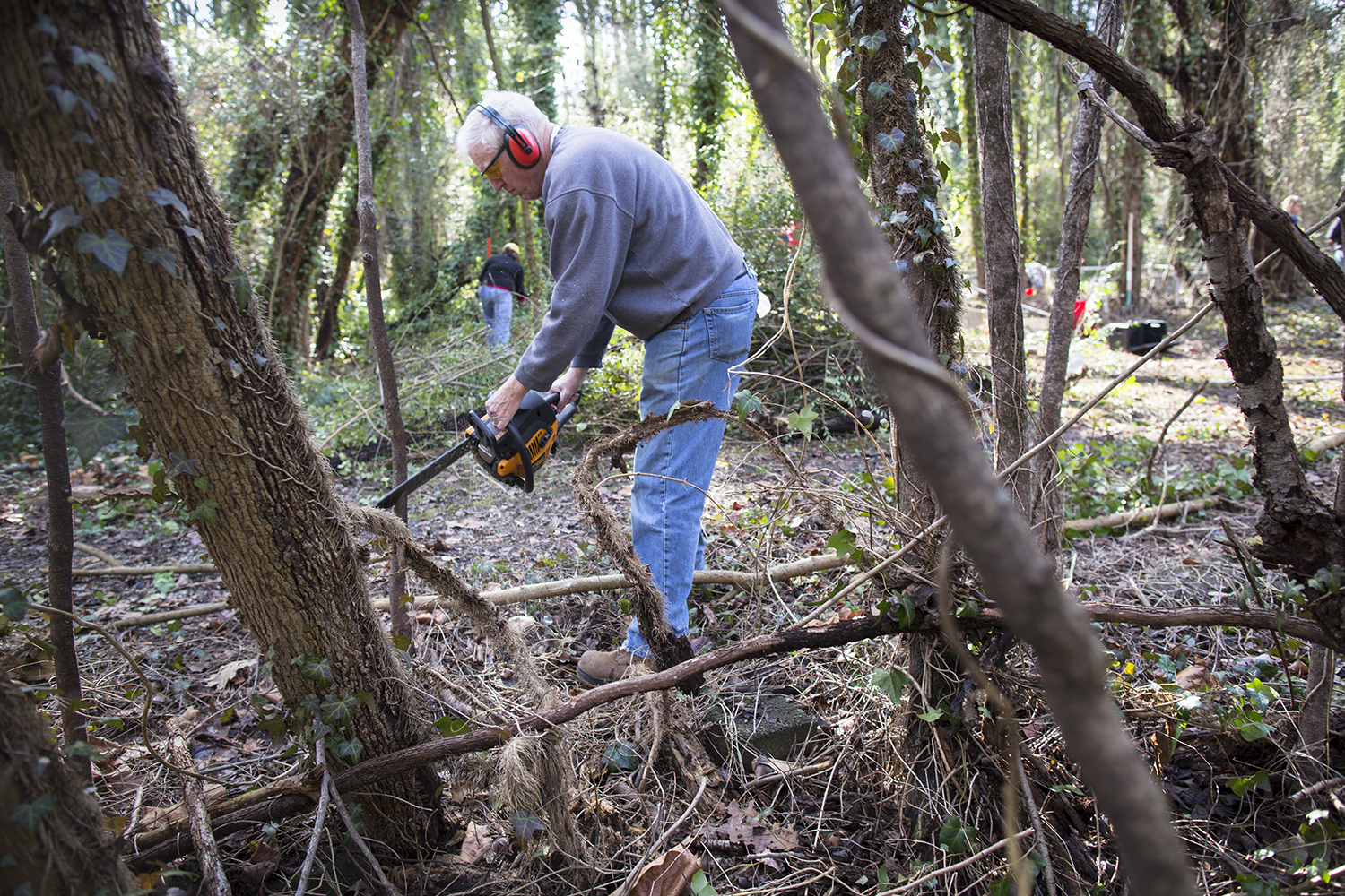 Volunteer coordinator John Shuck chainsaws vines into smaller, dragable pieces, East End Cemetery work day, January 2015.©brianpalmer.photos 2015