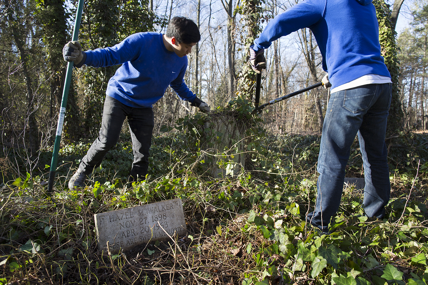 VCU students strip ivy from a headstone and clear burial plot at East End Cemetery, Henrico County/Richmond, Virginia, January 31, 2015. ©brianpalmer.photos 2015