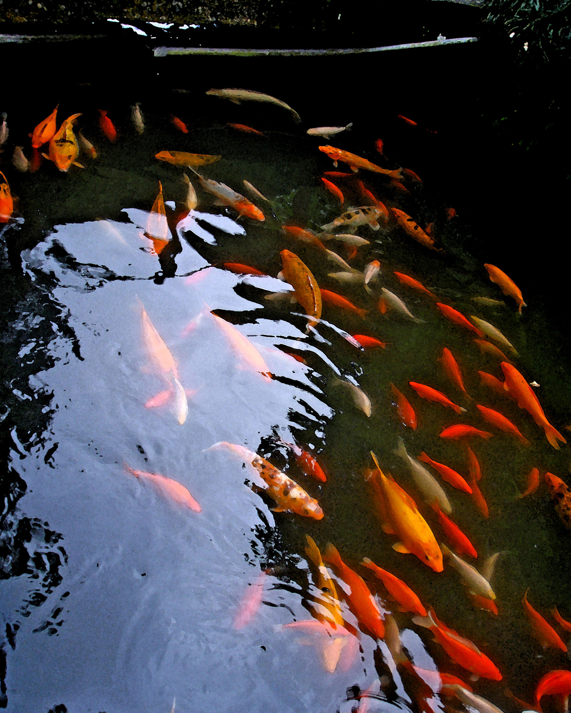 Koi Reflections