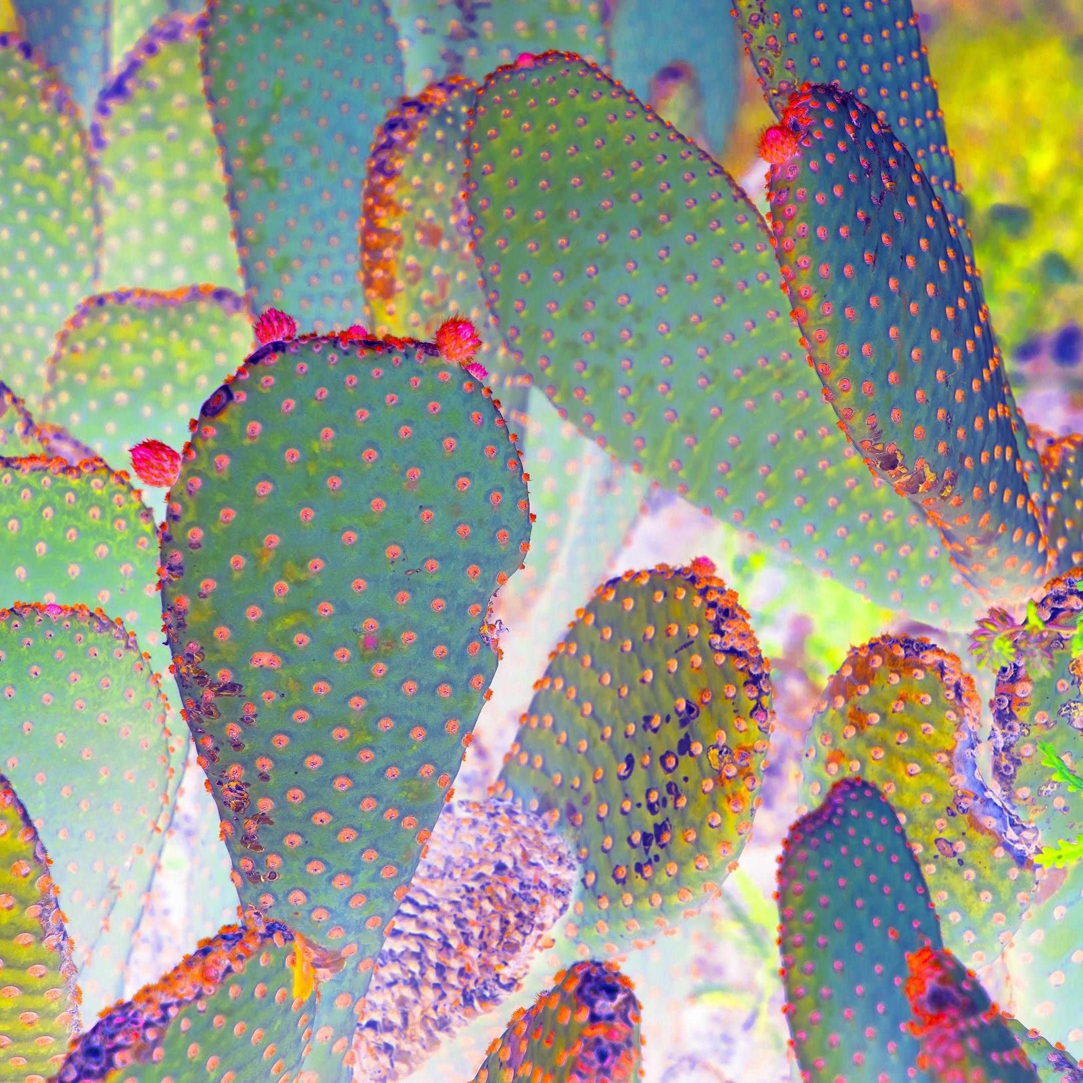 Good morning Cactus!