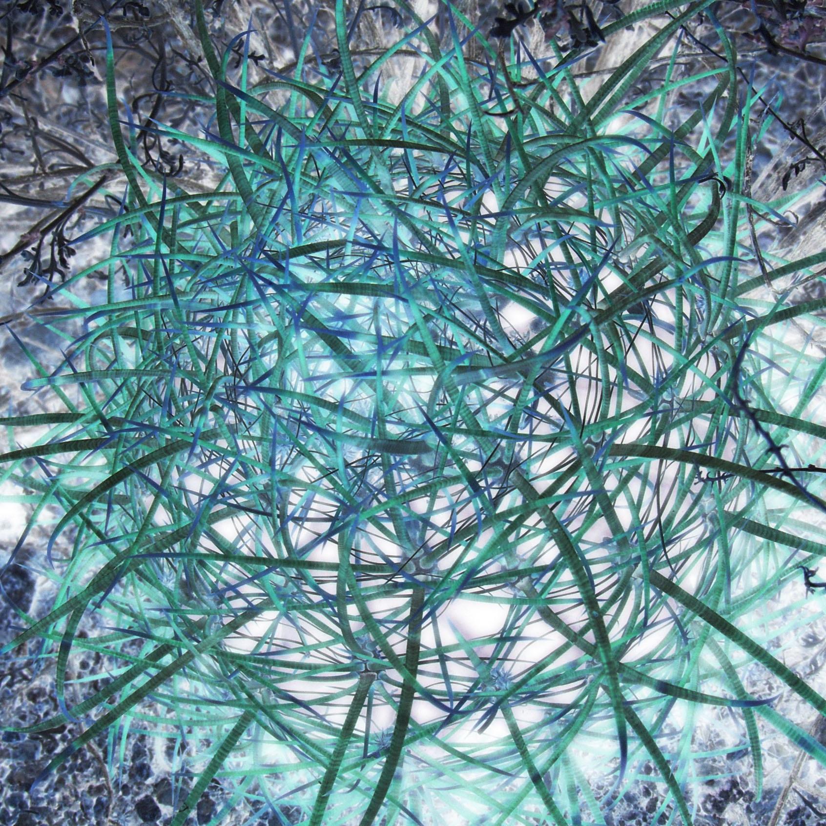 Electric blue cactus
