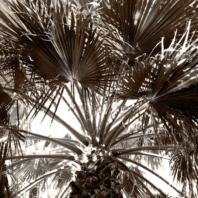 Fan palms in the sky SEPIA 24x24 FINAL WEBSITE.jpg