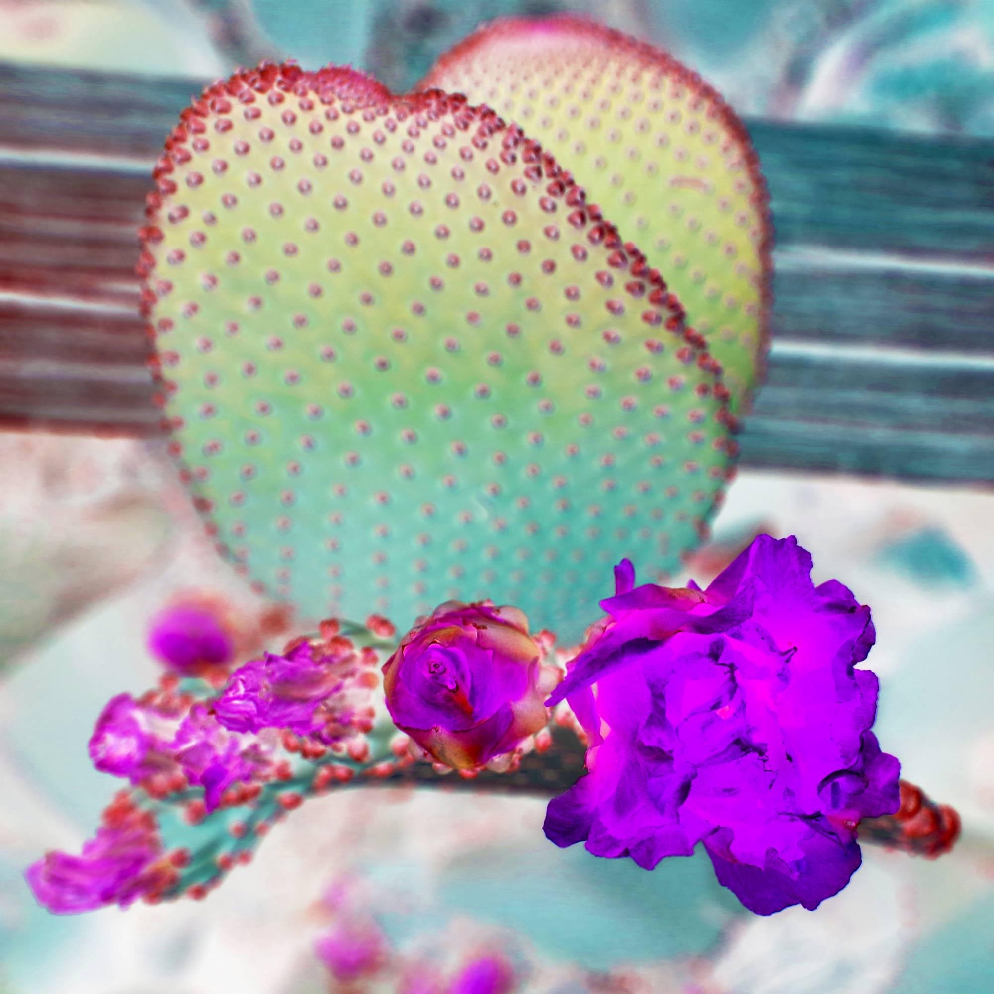 Beaver tail Cactus in bloom 24x24 FINAL WEBSITE.jpg