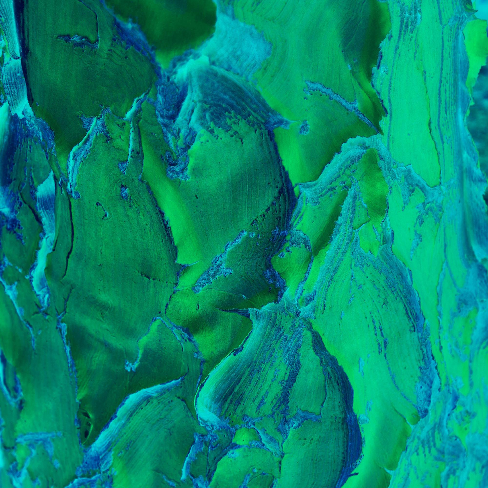 Green Bark 20x20 FINAL WEBSITE.jpg