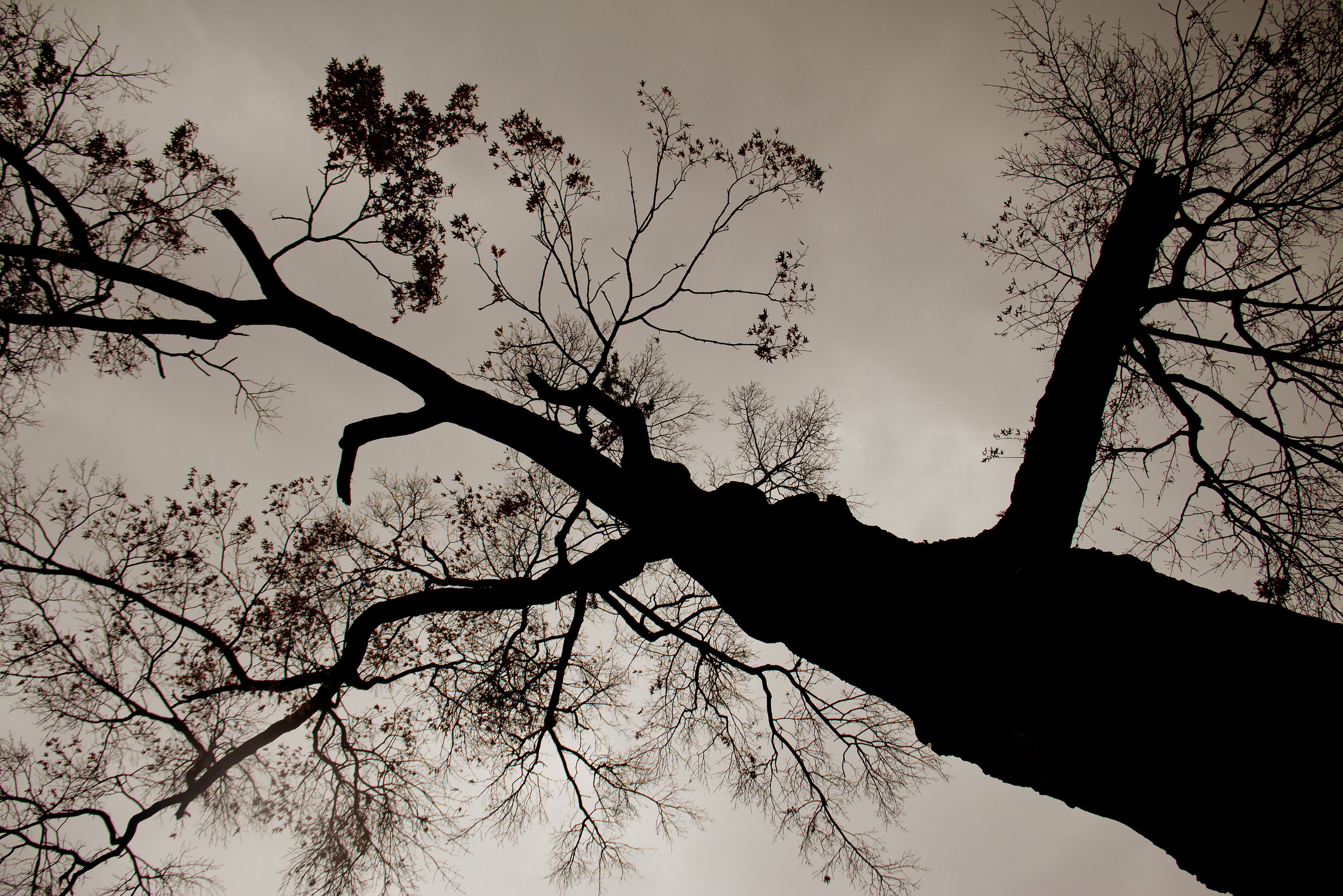 treesilhouette.jpg