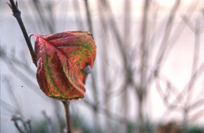 WinterColors003.jpg