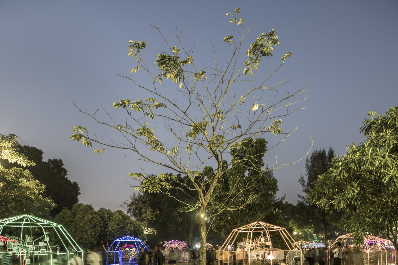 Happiness Trees, Lumphini Park, Bangkok, Thailand, 2015