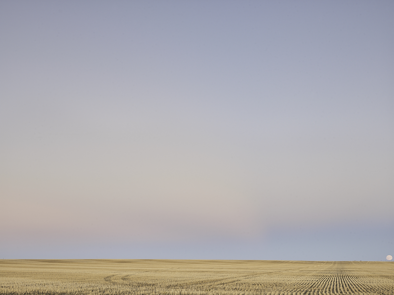 cleared 04, South of Rouleau, Saskatchewan, Canada, 2017
