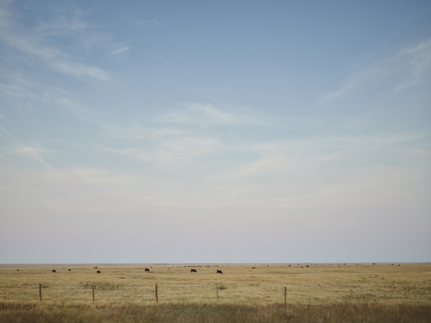 cleared 12, East of Parry, Saskatchewan, Canada, 2017
