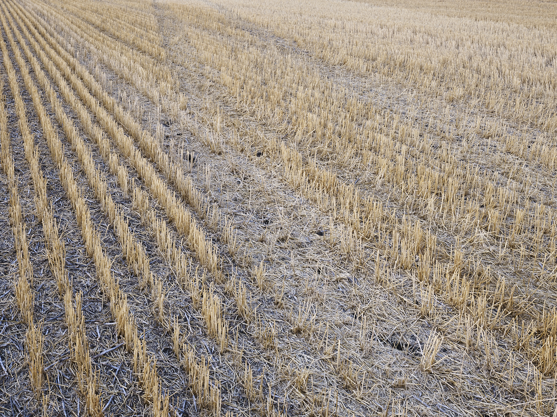 Traces 03, South east of Regina, Saskatchewan, Canada, 2017