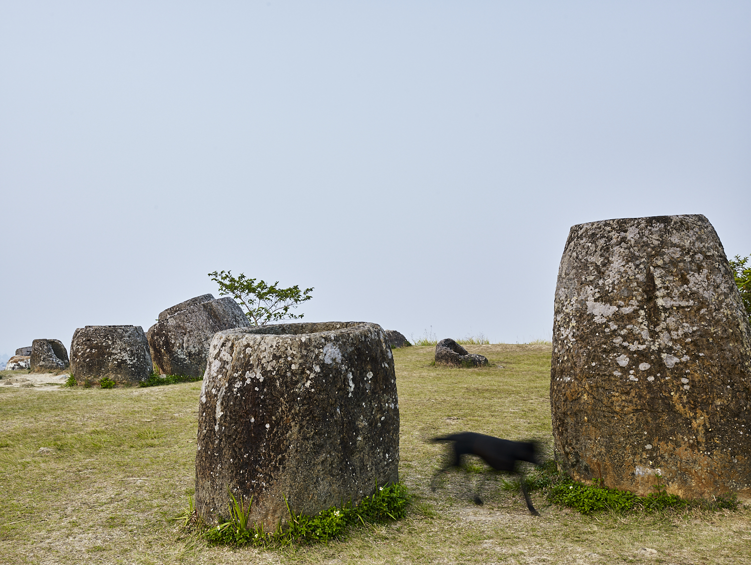 Black dog with jars, Plain of Jars, Xiang Khouang Plateau, Laos, 2016