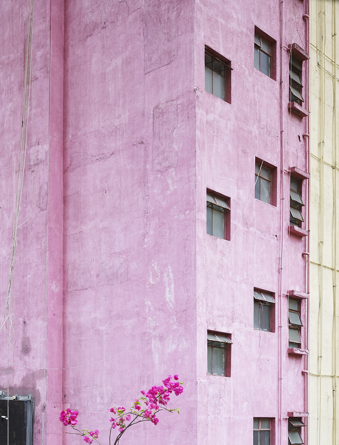 Flower and building, Central Hong Kong, 2017